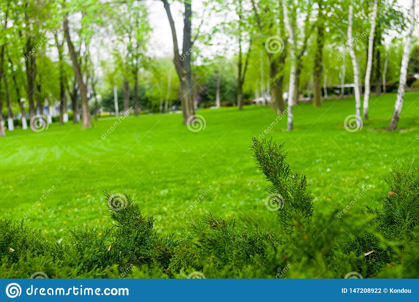 spring city Park - blooming flower and trees, bright green grass