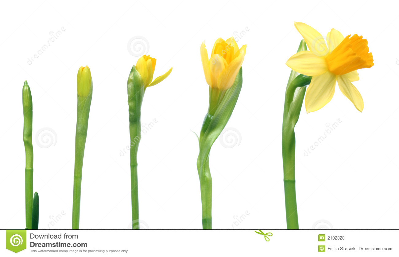 Spring Is Coming Royalty Free Stock Photos - Image: 2102828