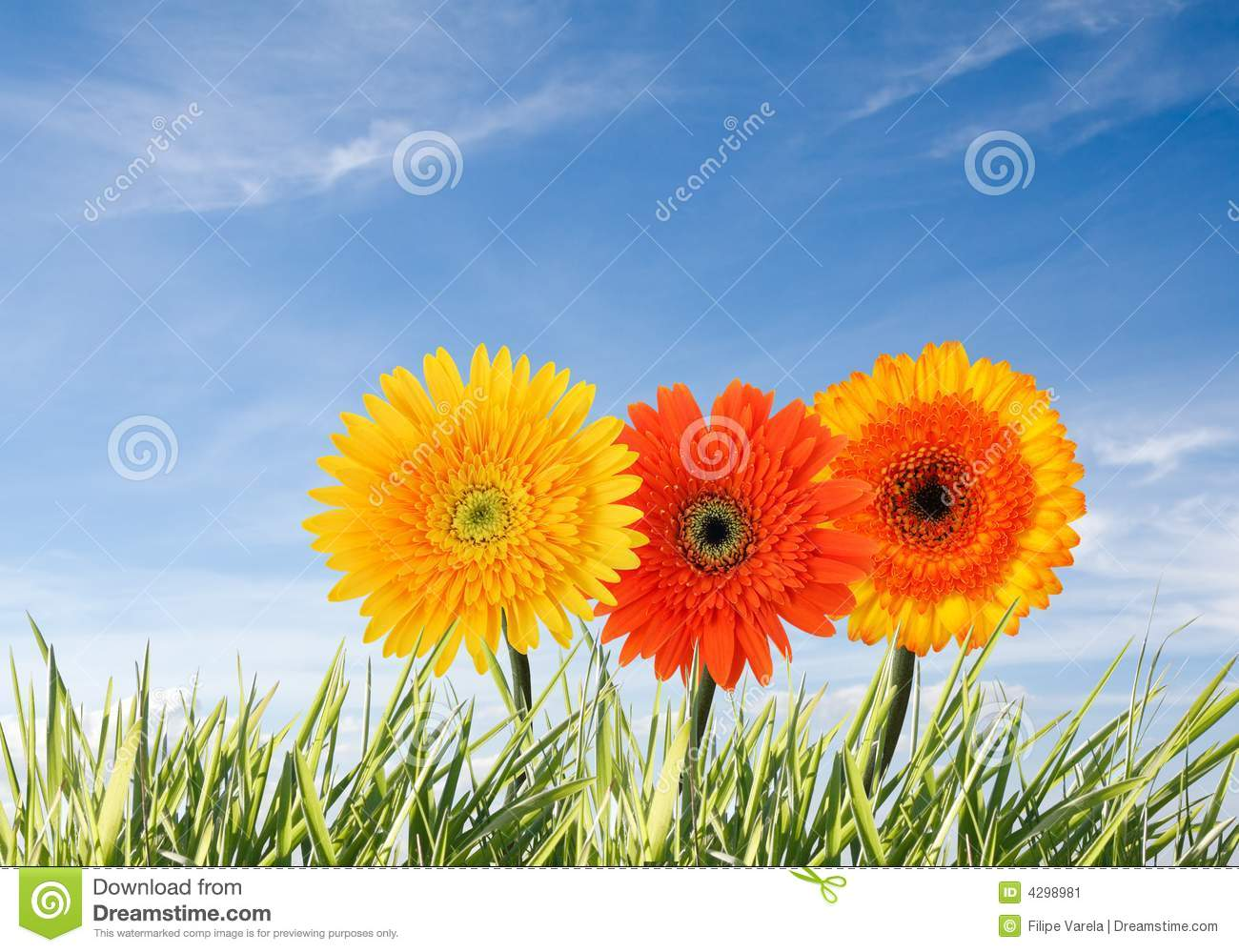 Download Spring concept stock image. Image of beautiful, close - 4298981