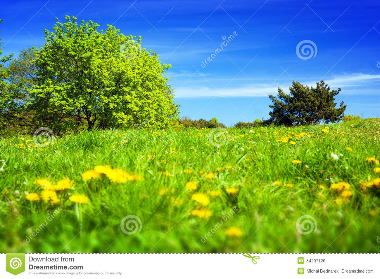 Spring Countryside, Meadow With Green Grass, Trees And ...