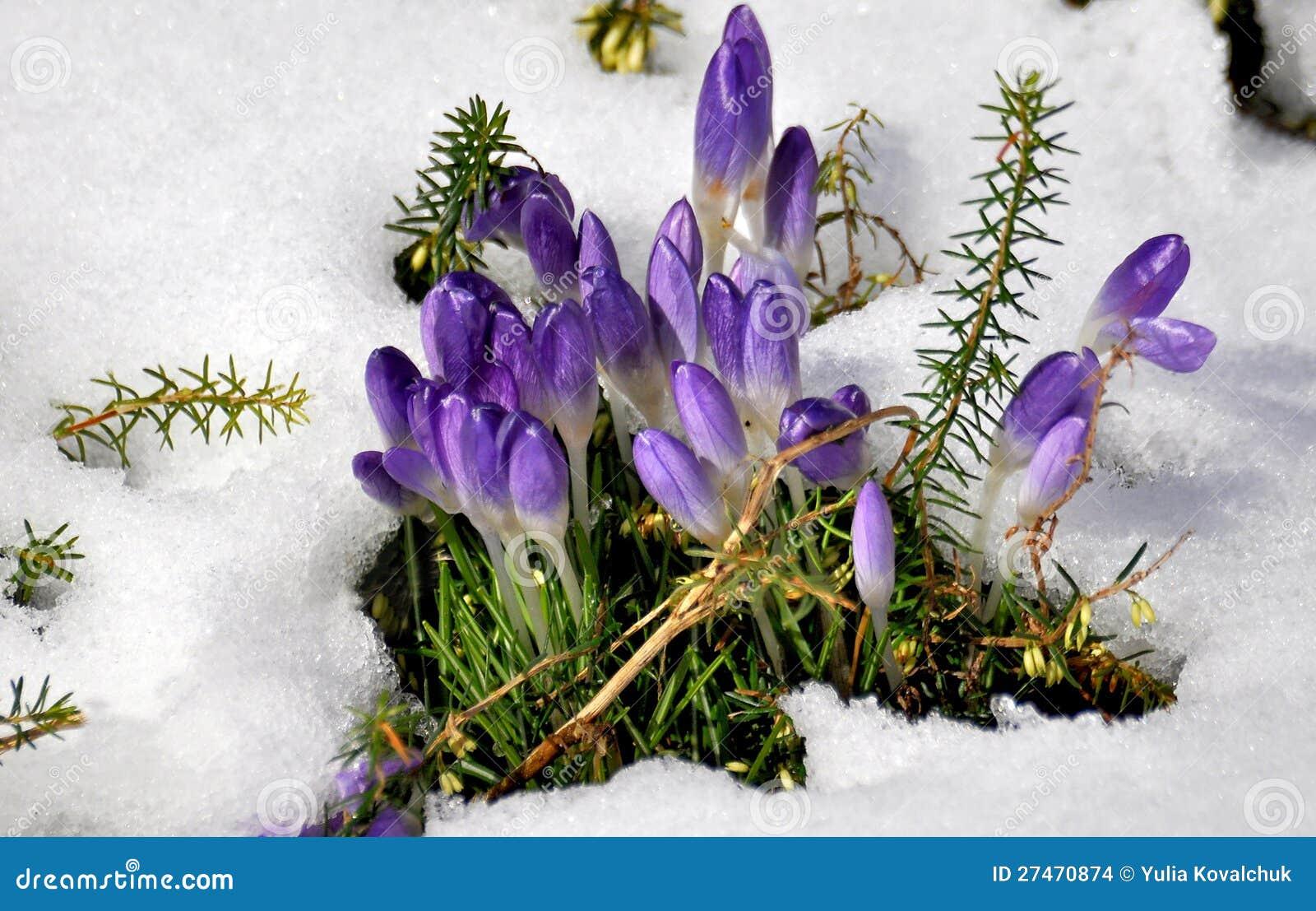 clip art spring snow - photo #35