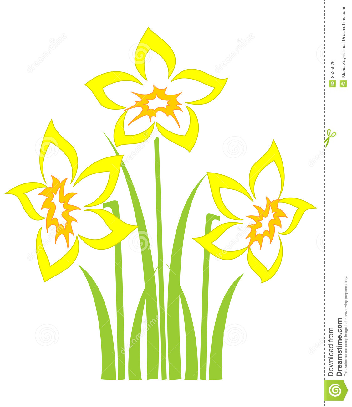 Spring Daffodils Royalty Free Stock Photo Image 8525925