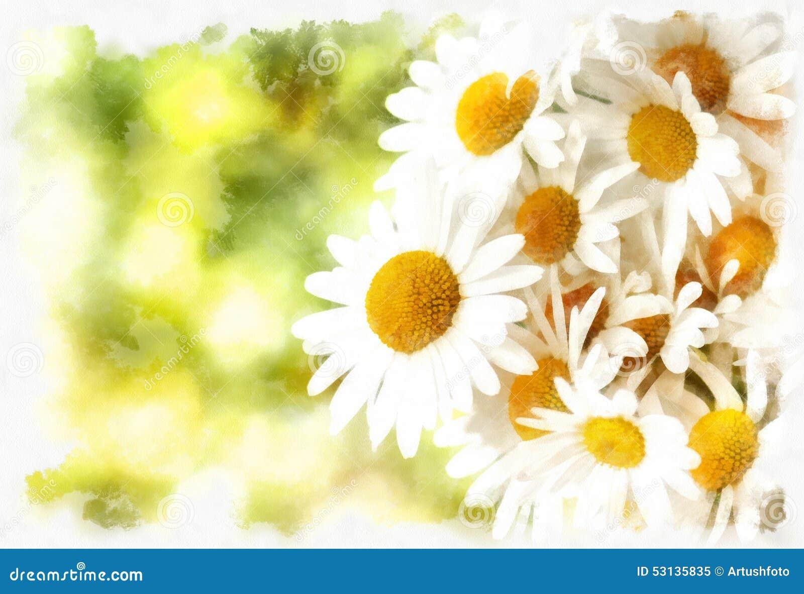 Spring Daisy Flower Field Vintage Stock Illustration Illustration
