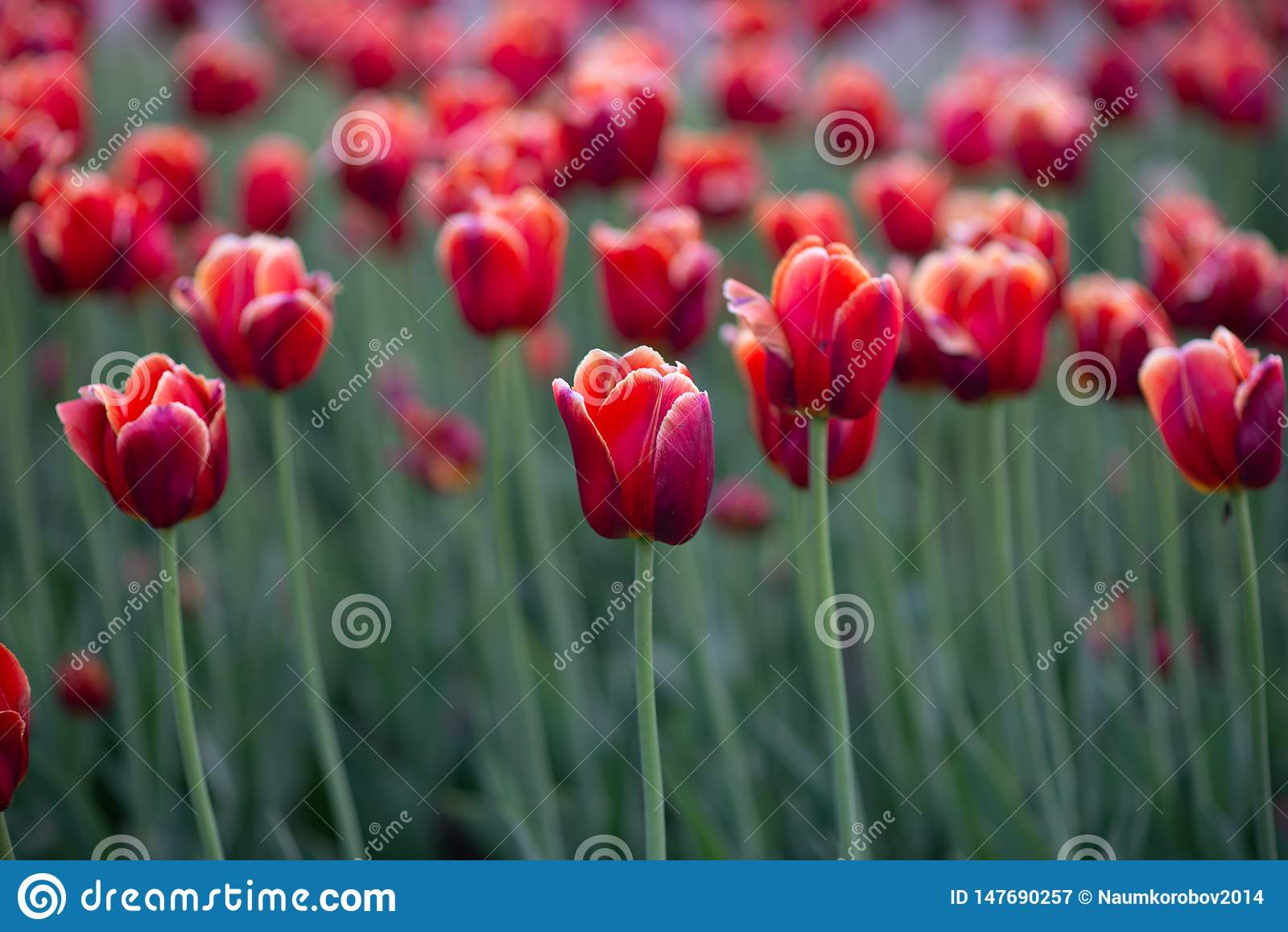 Spring Evening In Nature Desktop Wallpapers Postcard With Flowers Stock Image Image Of Spring Flower 147690257
