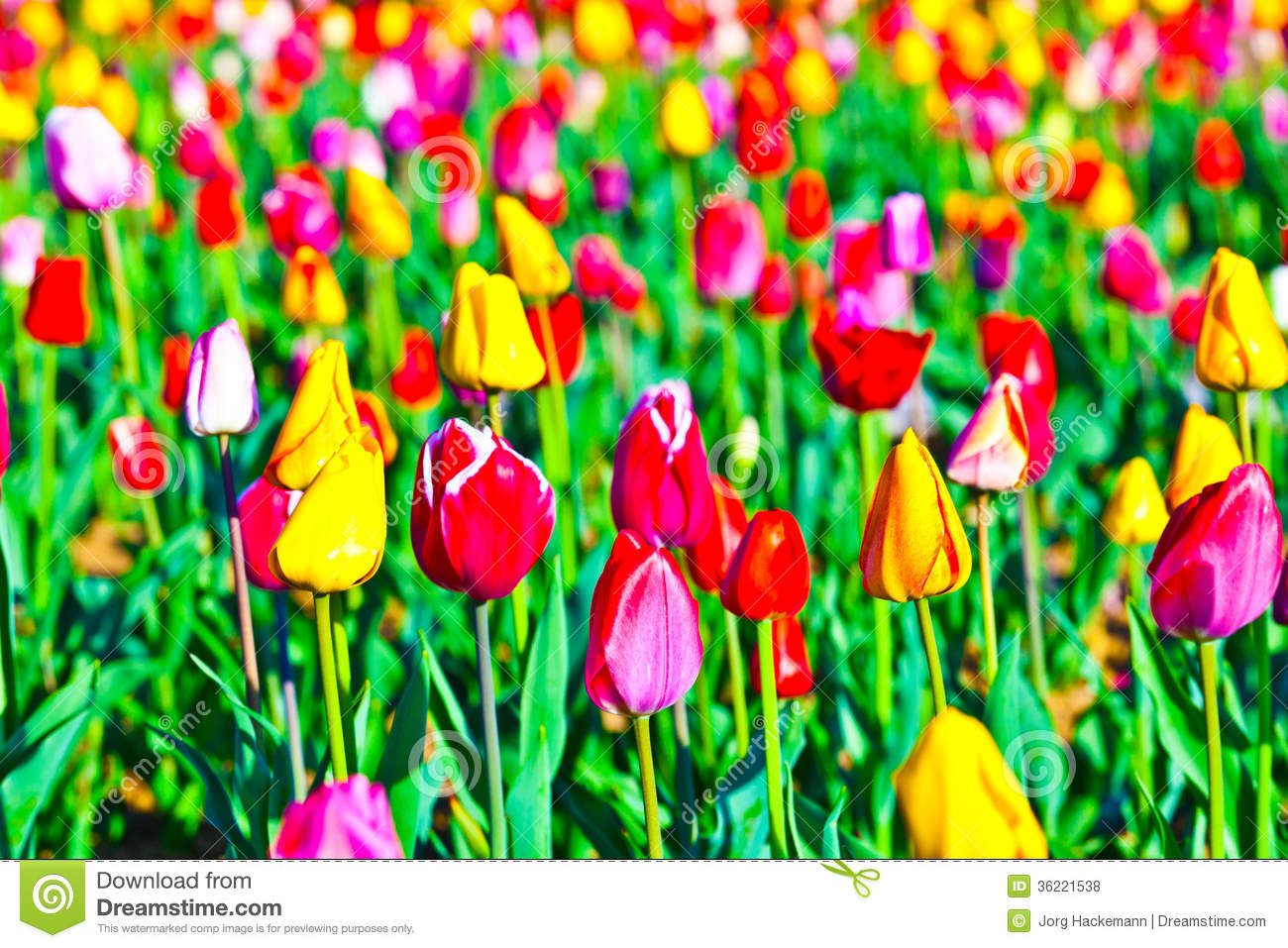 Spring field with blooming colorful