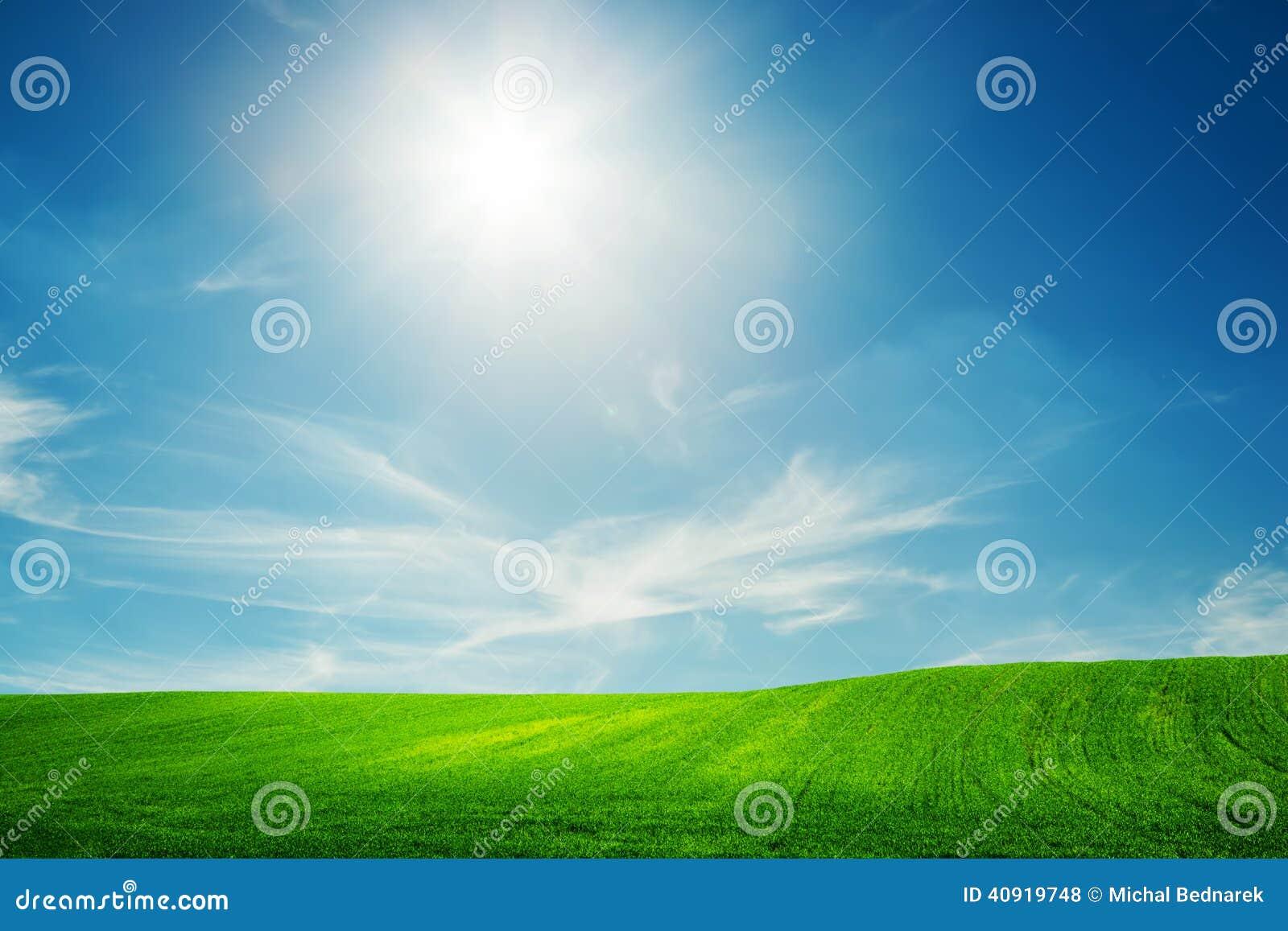 Spring field of green grass. Blue sunny sky