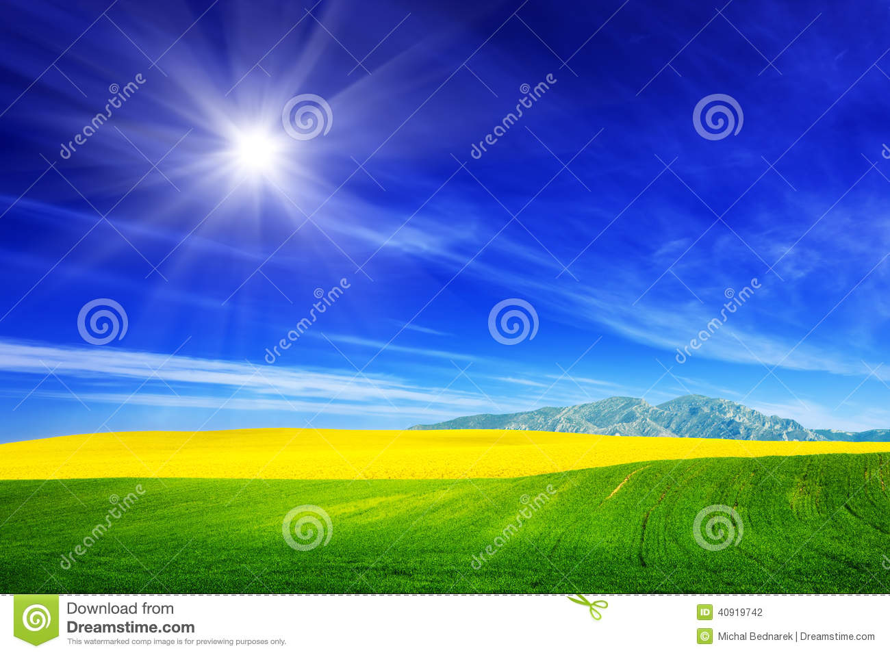 Spring field of green grass and yellow flowers, rape. Blue sunny sky