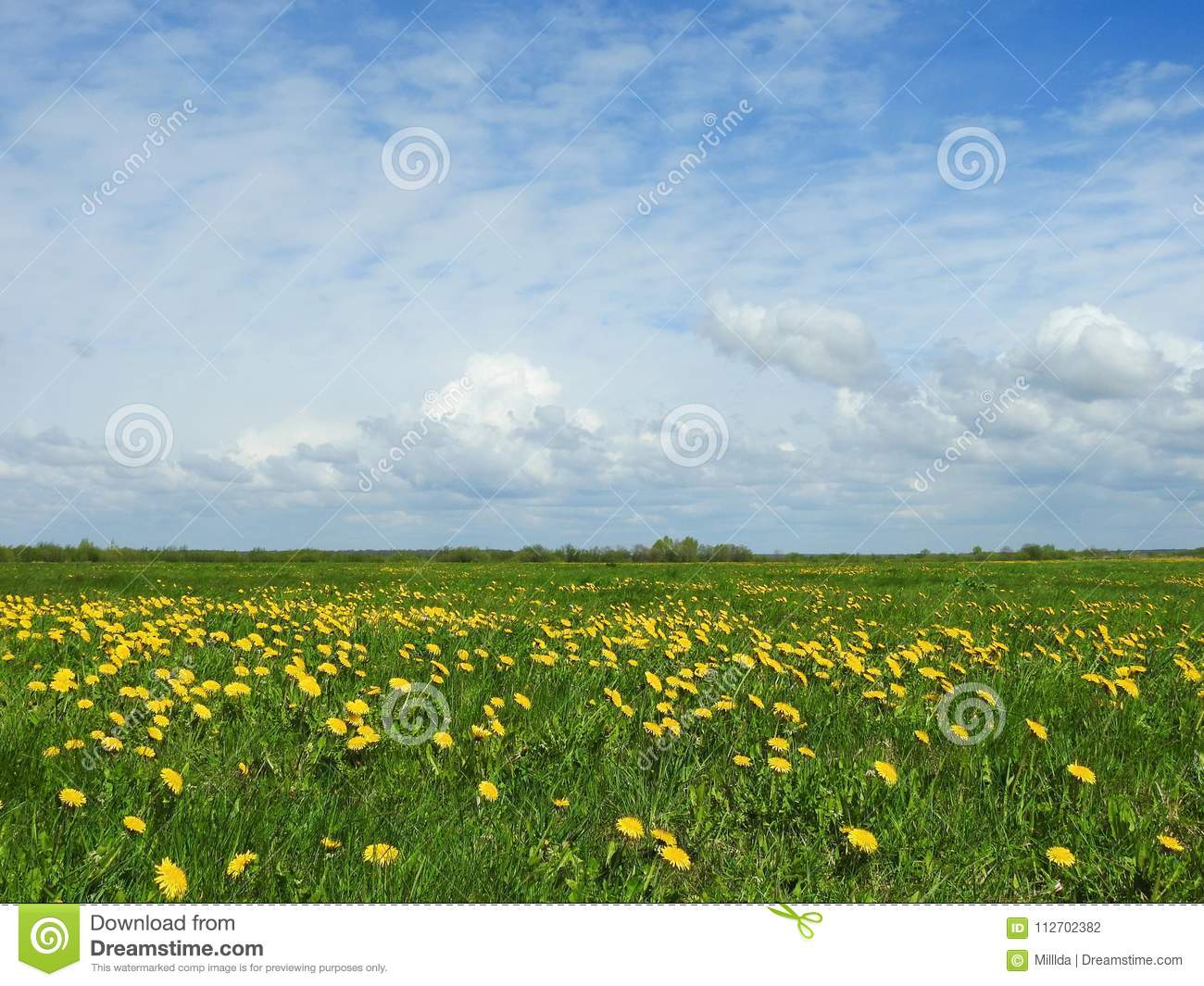 Spring Field With Yellow Flowers Lithuania Stock Photo Image Of