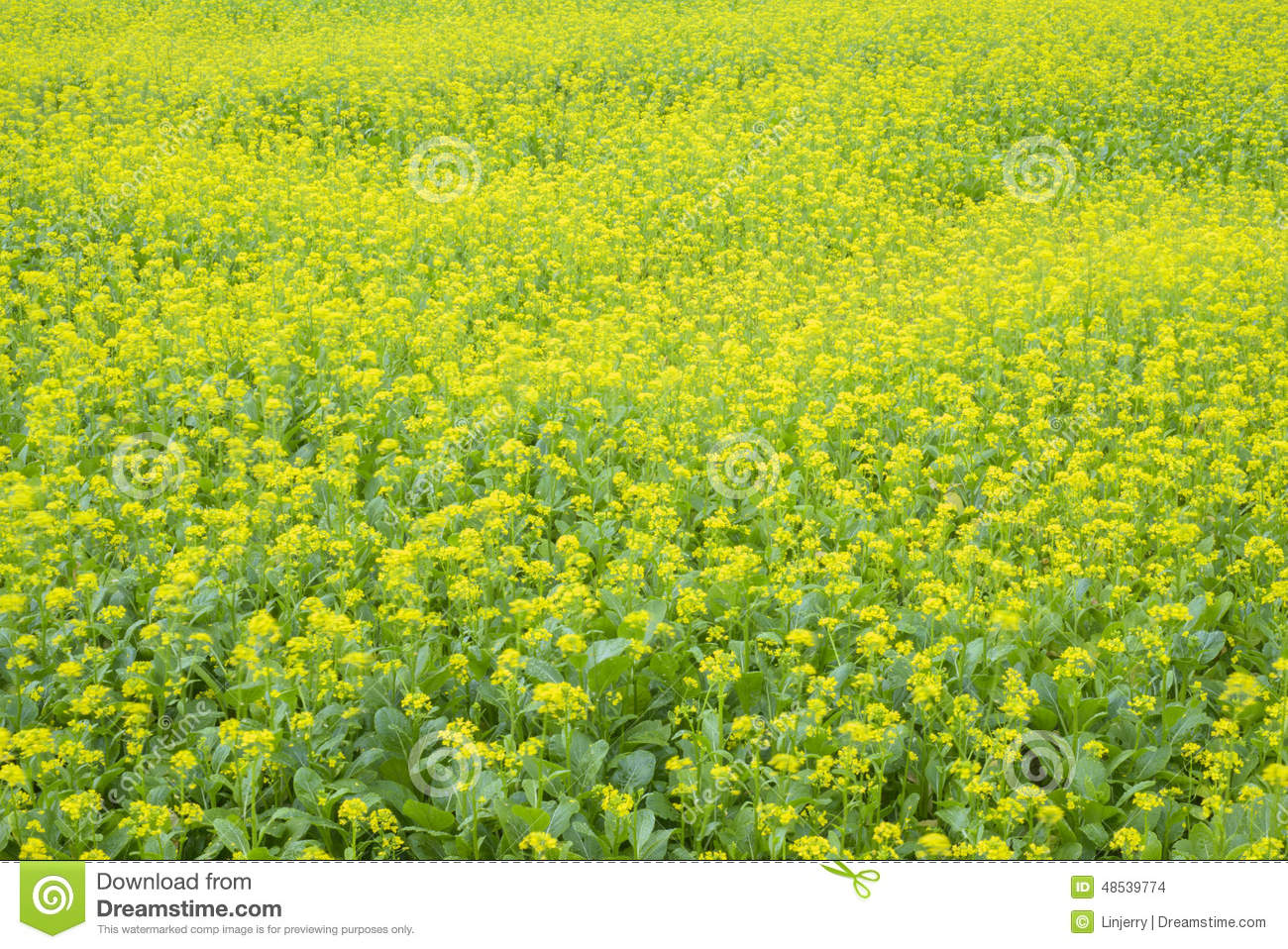 flowers spring field yellow - photo #18