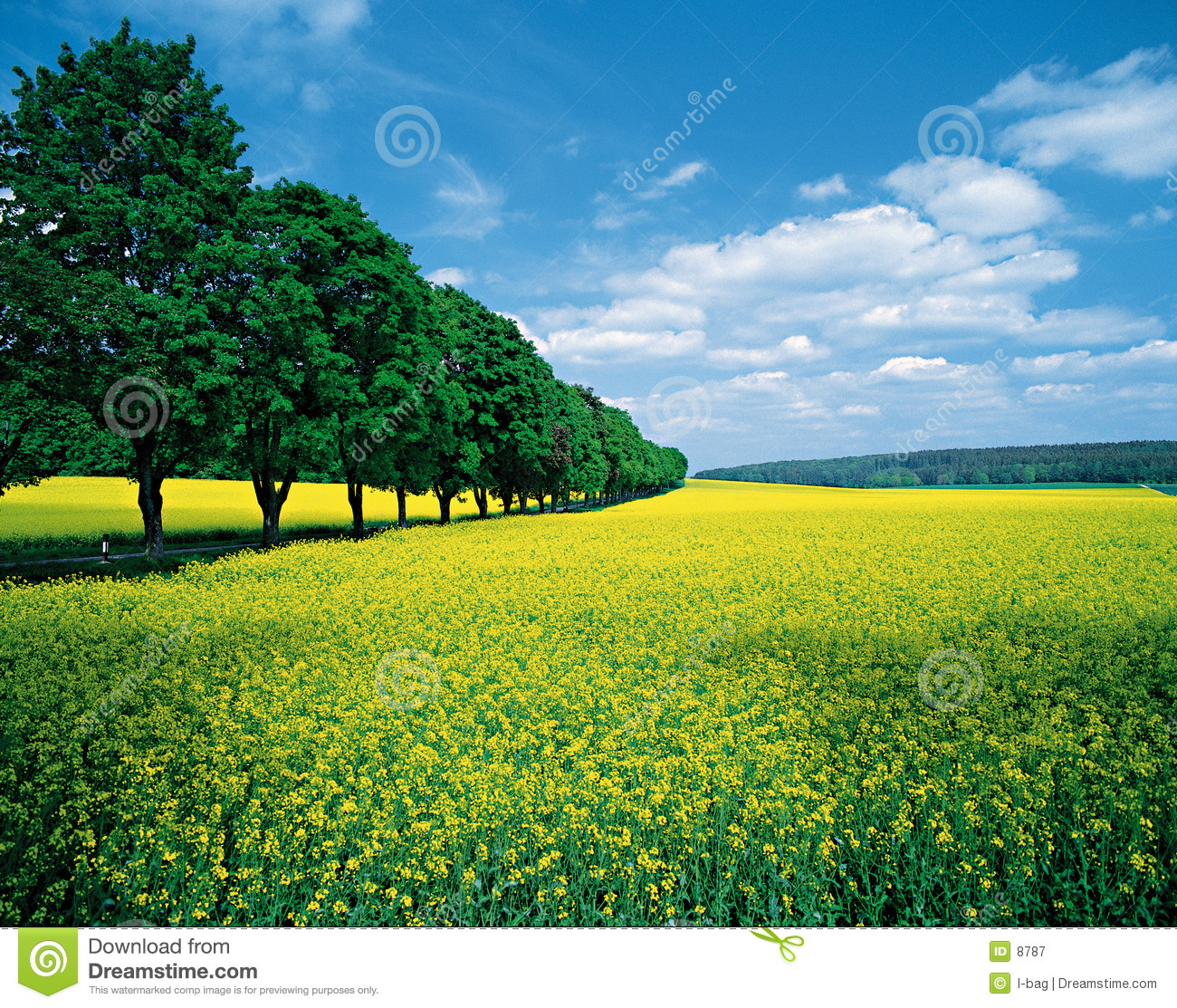 Image Royalty Free allee Royalty Free Stock