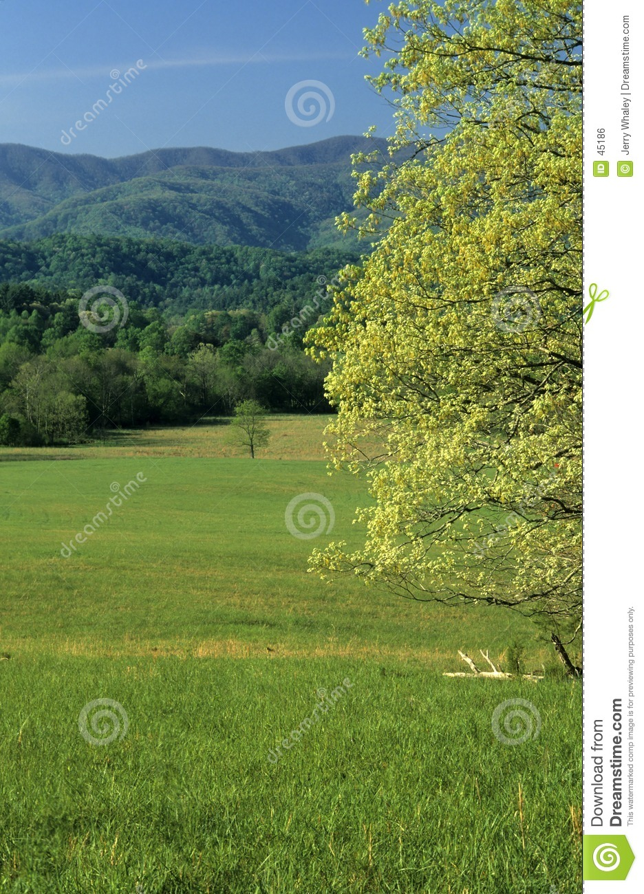 Spring, Fields, Mountains