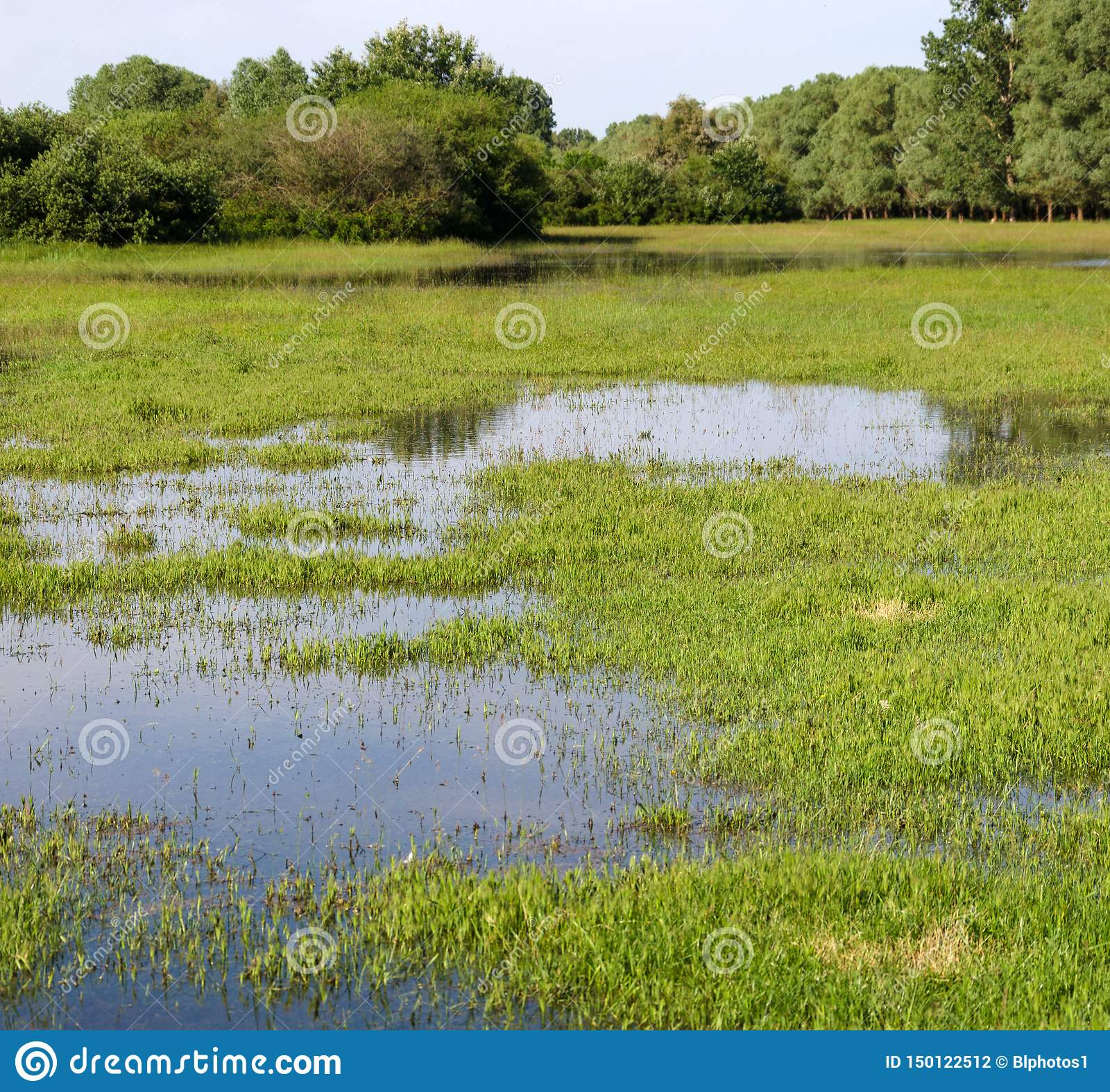 Spring flooding. Flood basin of the Tisza River in Tiszalok, Hungary. Hungarian countryside. Overflow of water from the river.