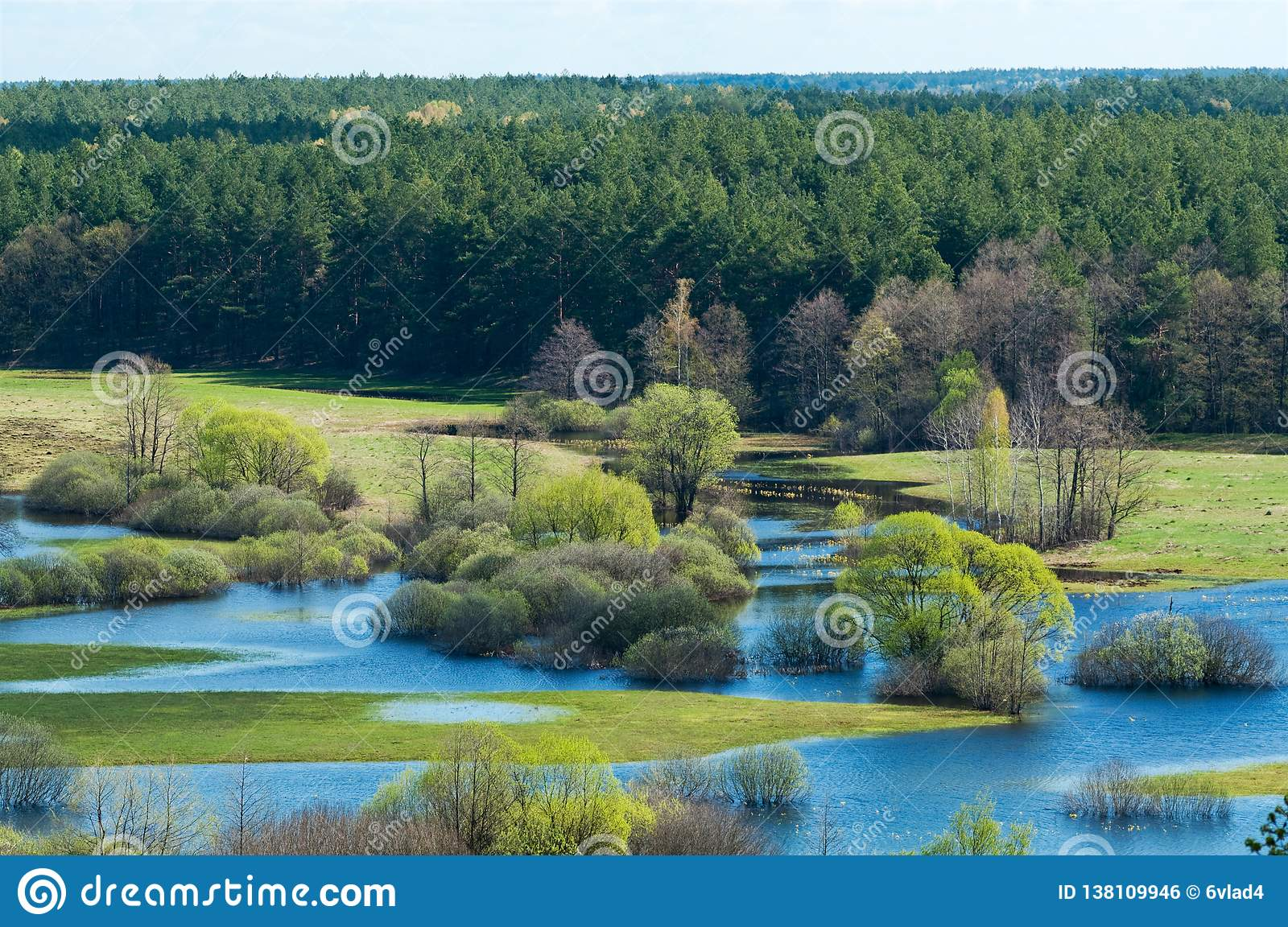 Spring flooding on the river against the background of the coniferous forest and blue sky