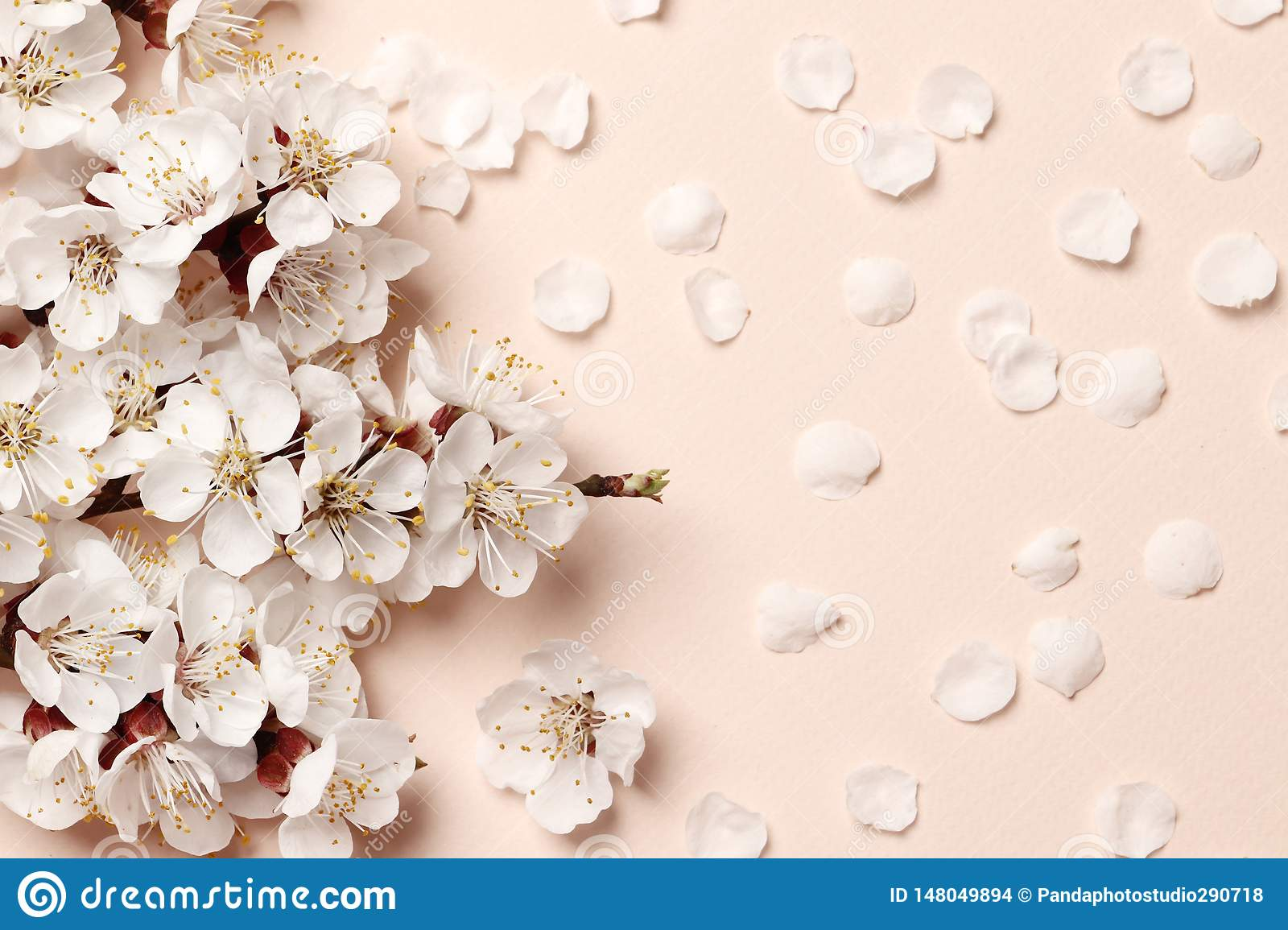 Spring Floral Background Texture And Wallpaper Flat Lay Of White