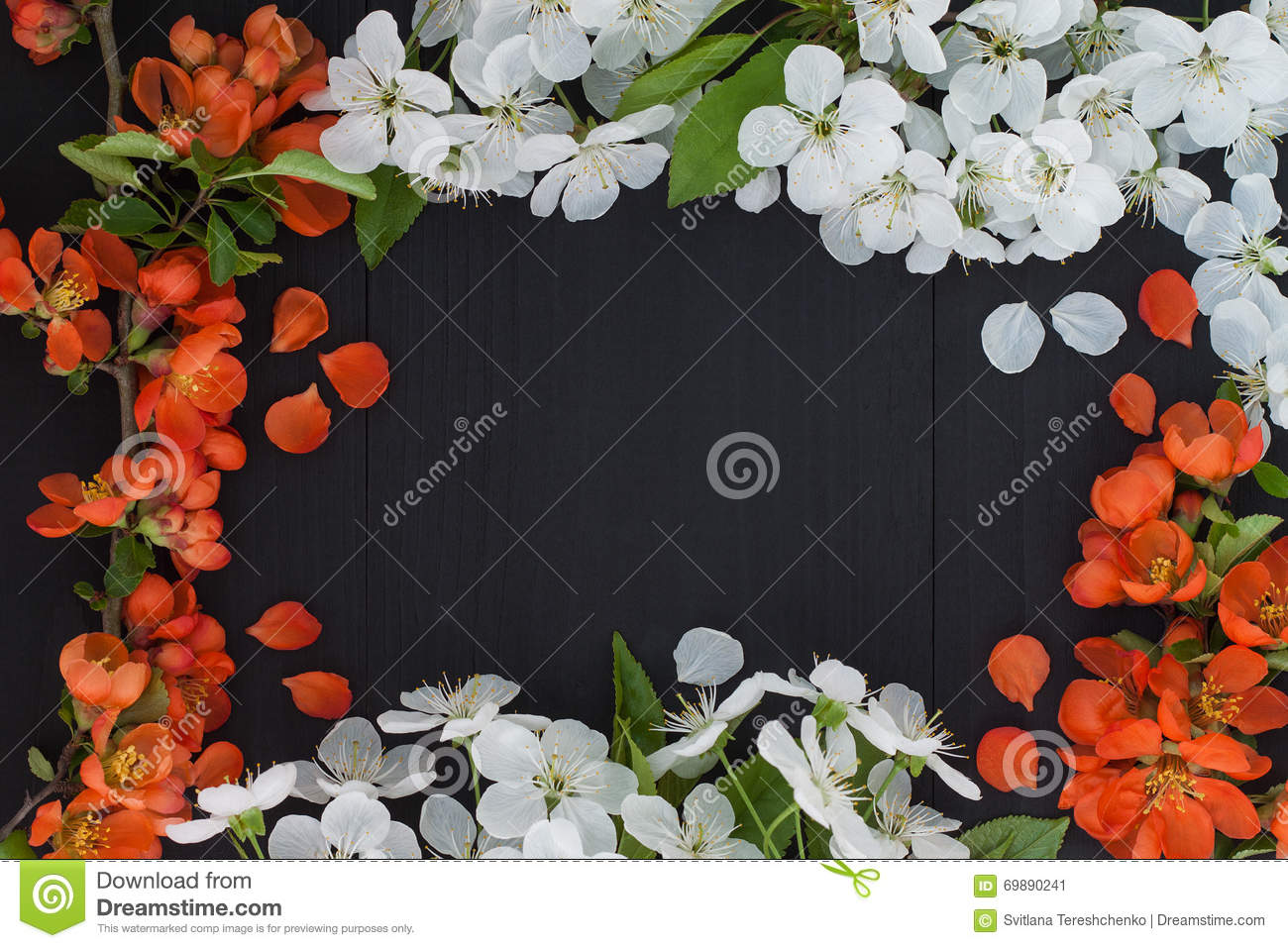 Spring Floral Frame Background With White Cherry Blossom And Red
