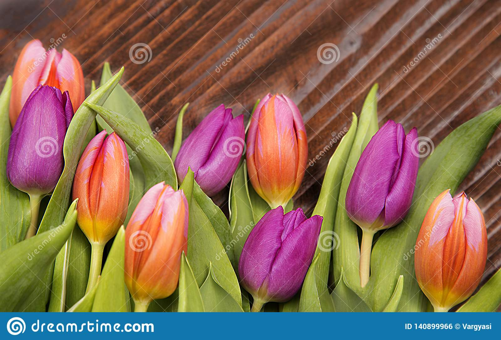 Spring flover, colored tulips