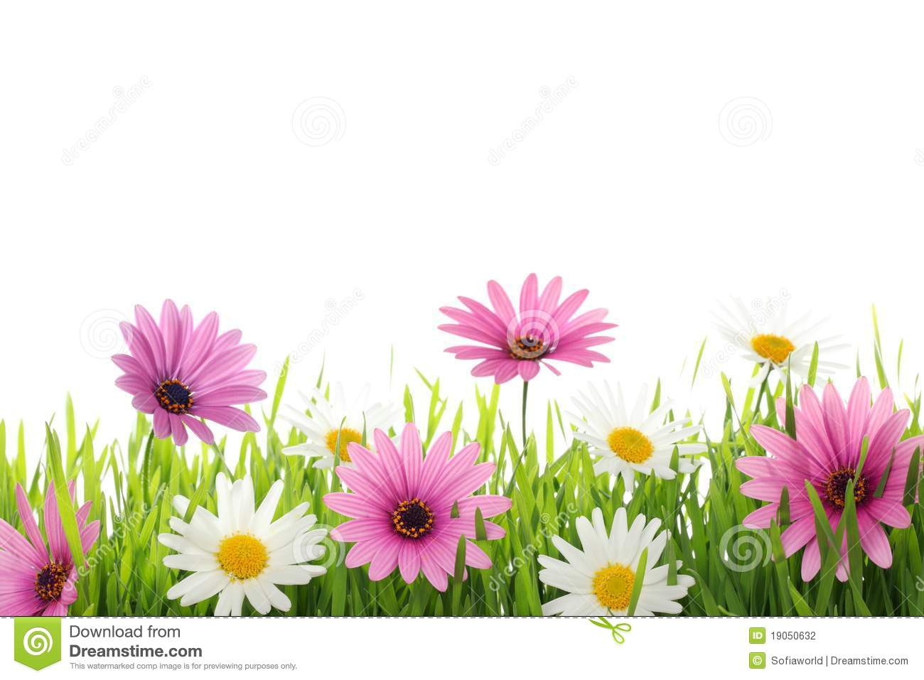 Spring flower stock photo image of pink background 19050632 spring flower mightylinksfo Images