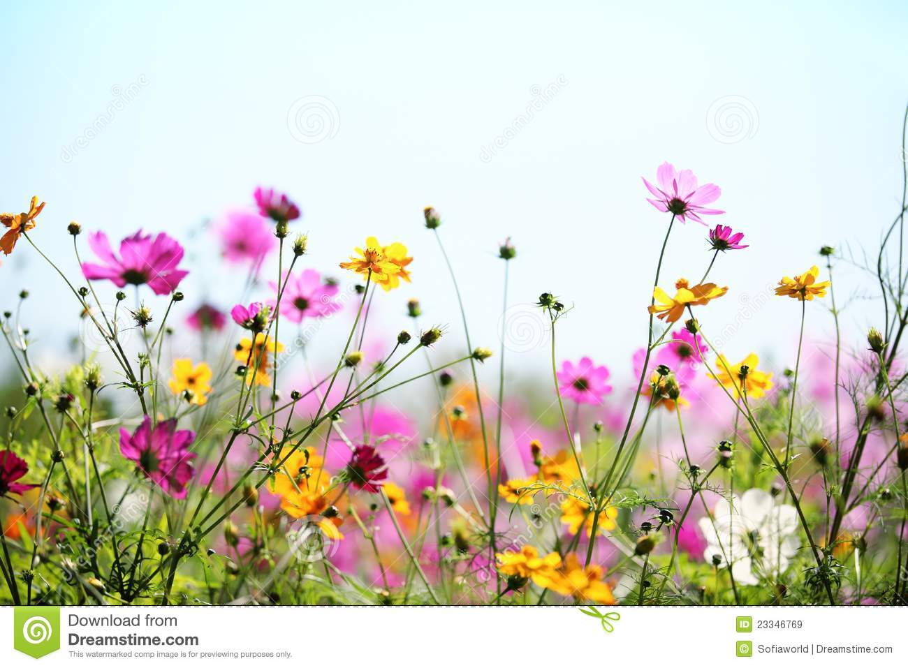Spring Flower Stock Image Image Of Background Shallow 23346769