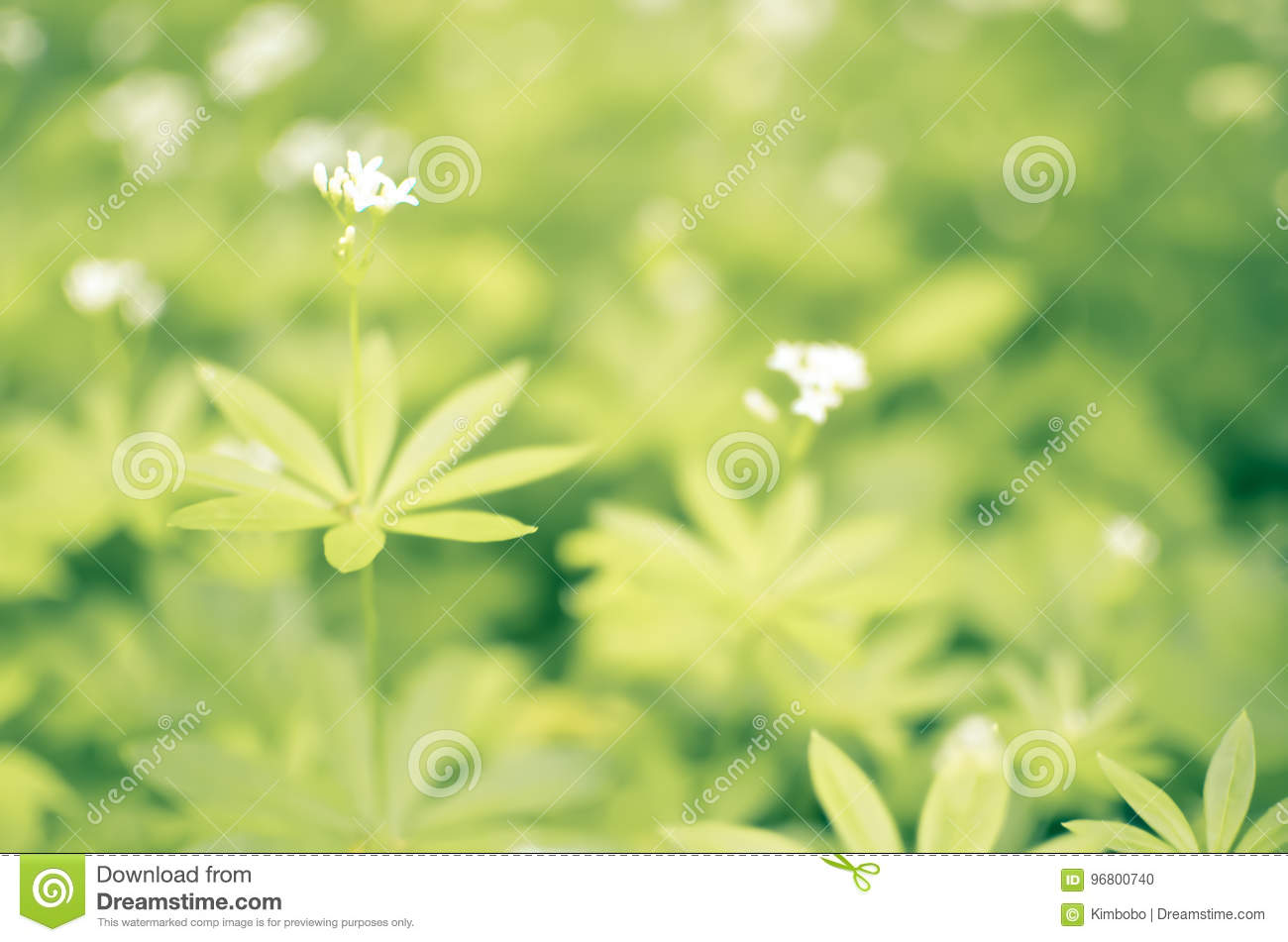 Spring Flower Background Snowdrops Stock Photo Image Of Forest