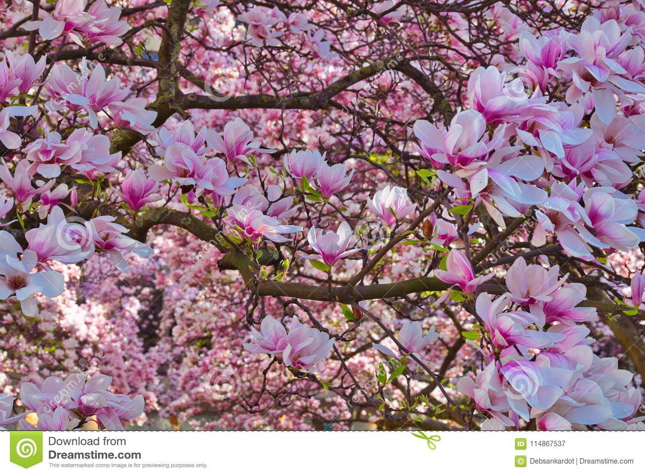Spring Flower In Branches Of Tress Stock Image Image Of Colorful