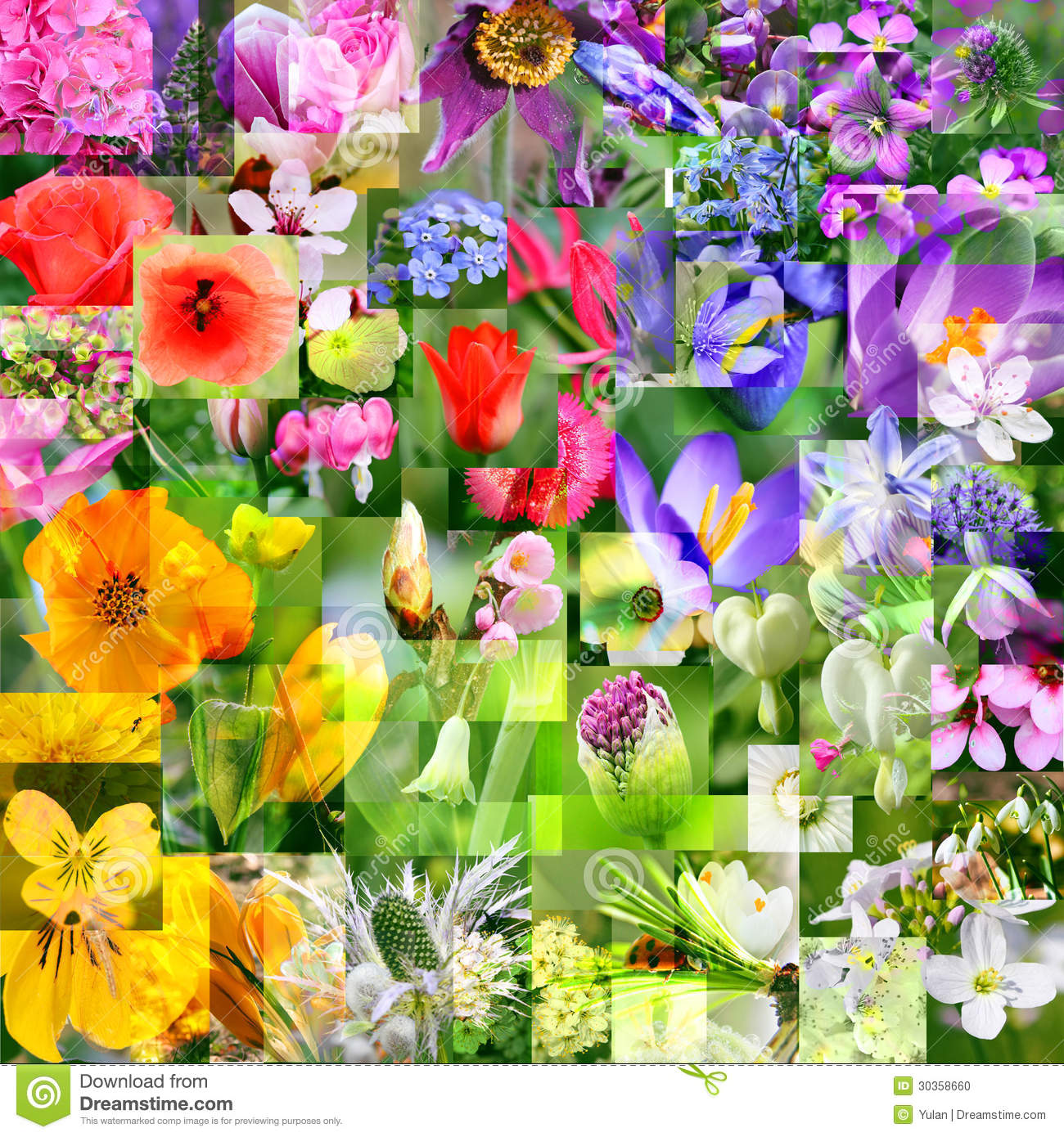 Spring Flower Collage Abstract Display Stock Photo