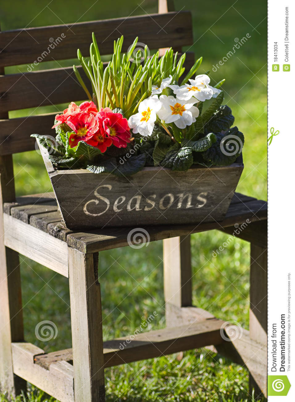 Spring Flower Decoration In Garden With Primroses Stock Photo ...
