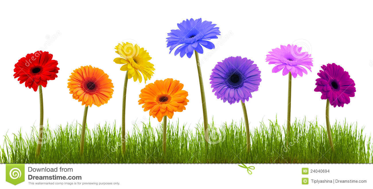 Spring Flower And Grass Over White Stock Photo Image Of Gardening