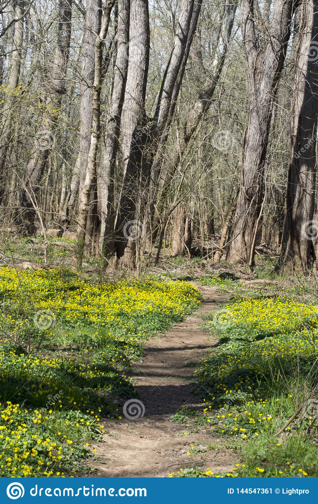 Spring flower lined trail