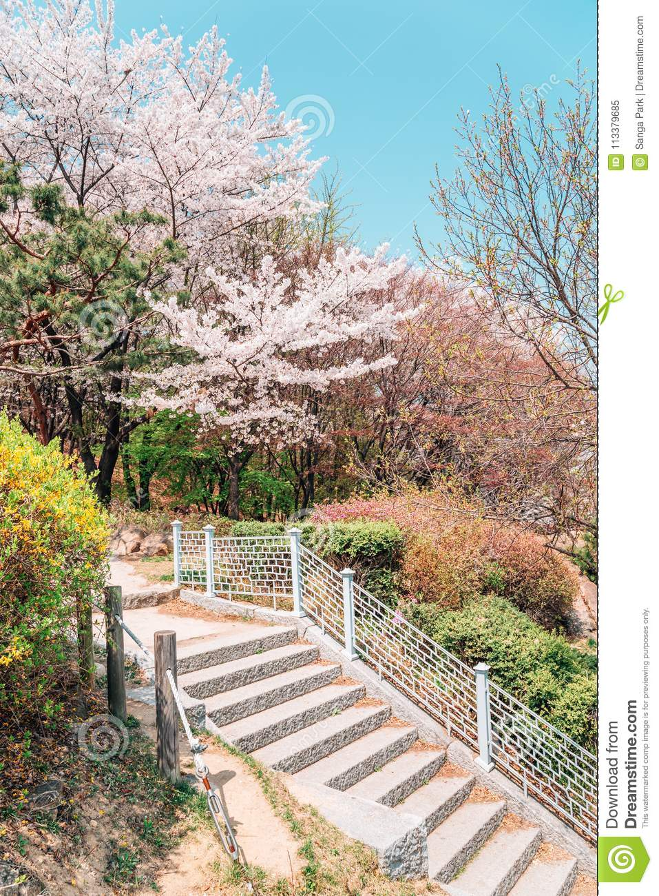 Spring Flower Park In Suwon Korea Stock Image Image Of
