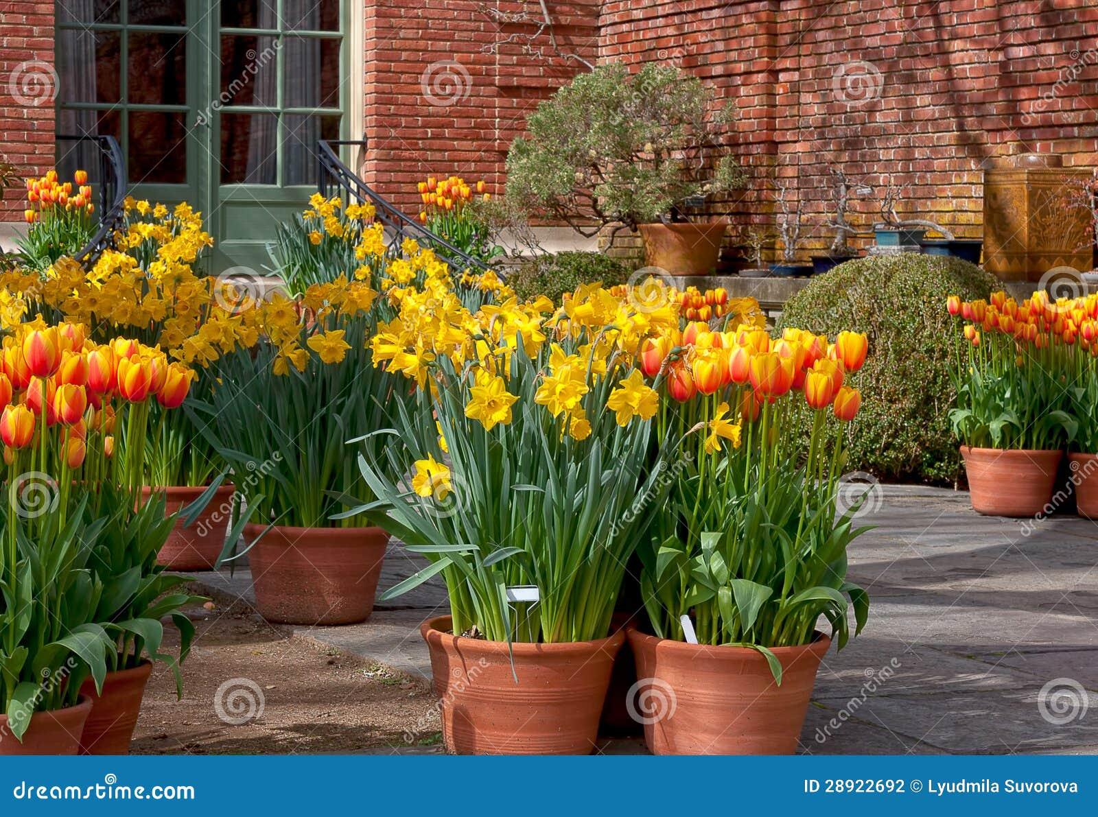 Spring flower pots stock photo Image of gardening green