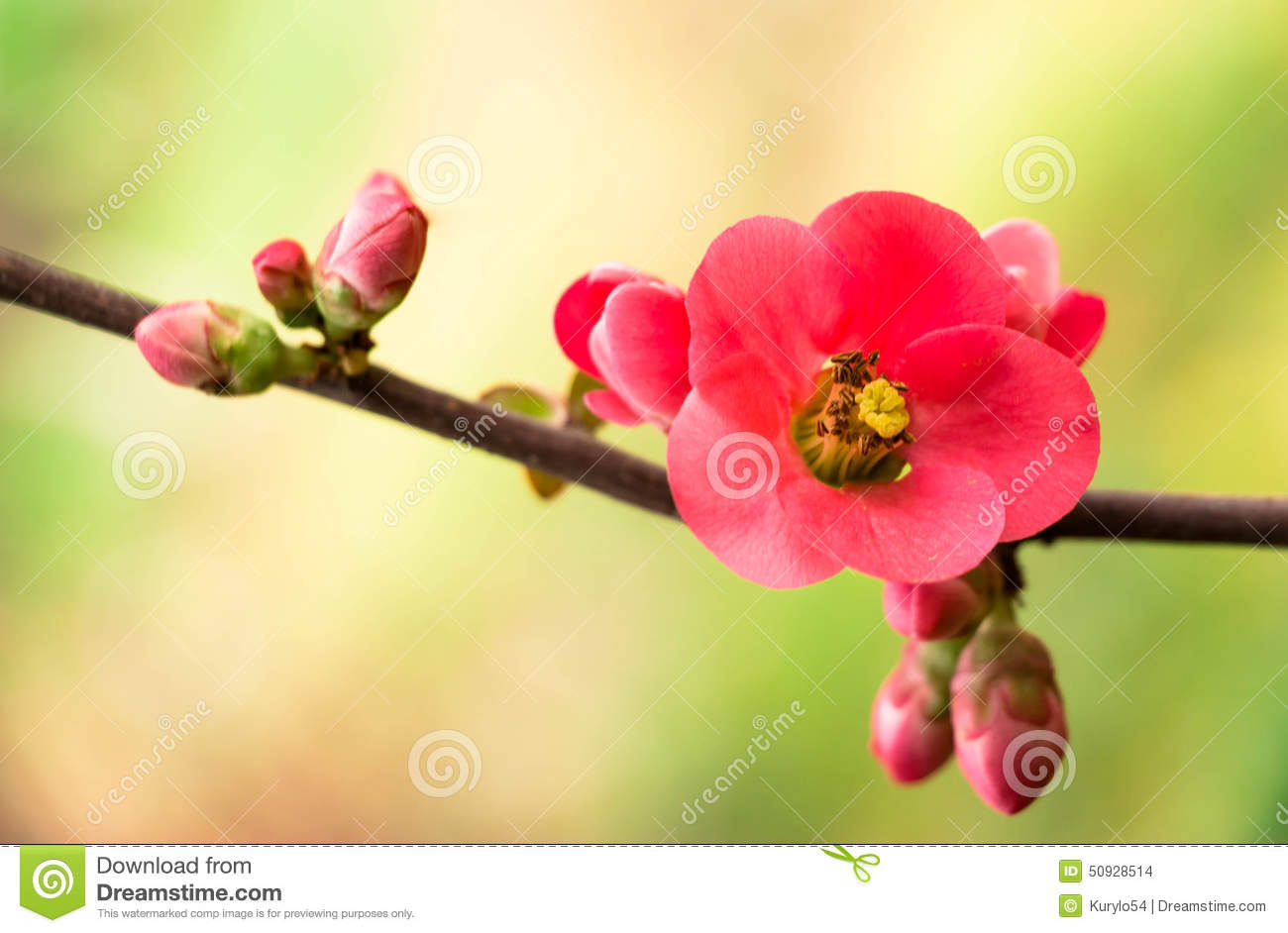 Spring flower sprig with pink flowers the beginning of spring download spring flower sprig with pink flowers the beginning of spring stock photo mightylinksfo