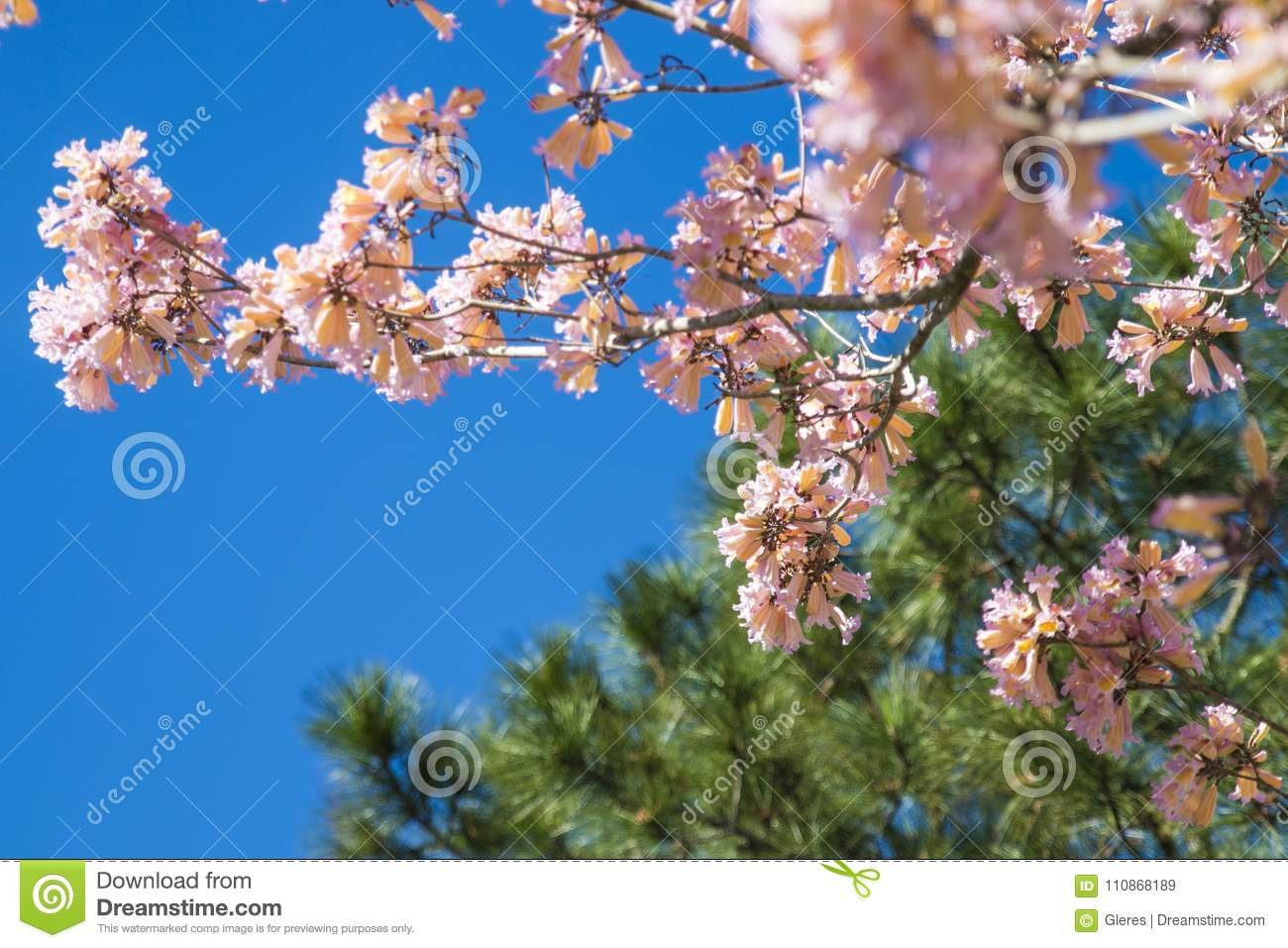 Spring flowering of trees stock image image of trees 110868189 spring flowering of trees izmirmasajfo