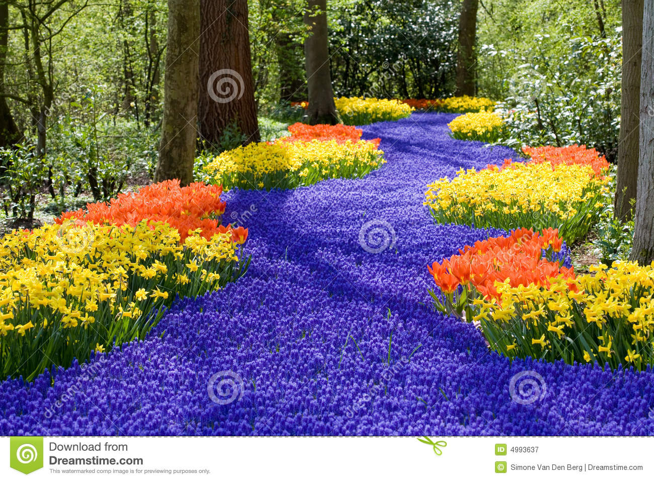Spring flowers stock image image of flora floral spring 4993637 beautiful field of spring flowers with narcissus tulips and muscari mightylinksfo