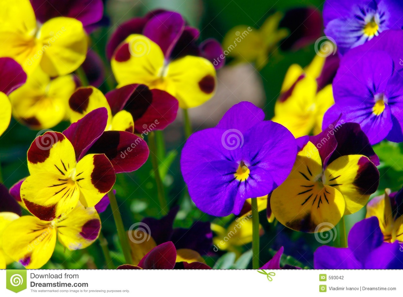 Spring Flowers Stock Photo Image Of Garden Close Growing 593042