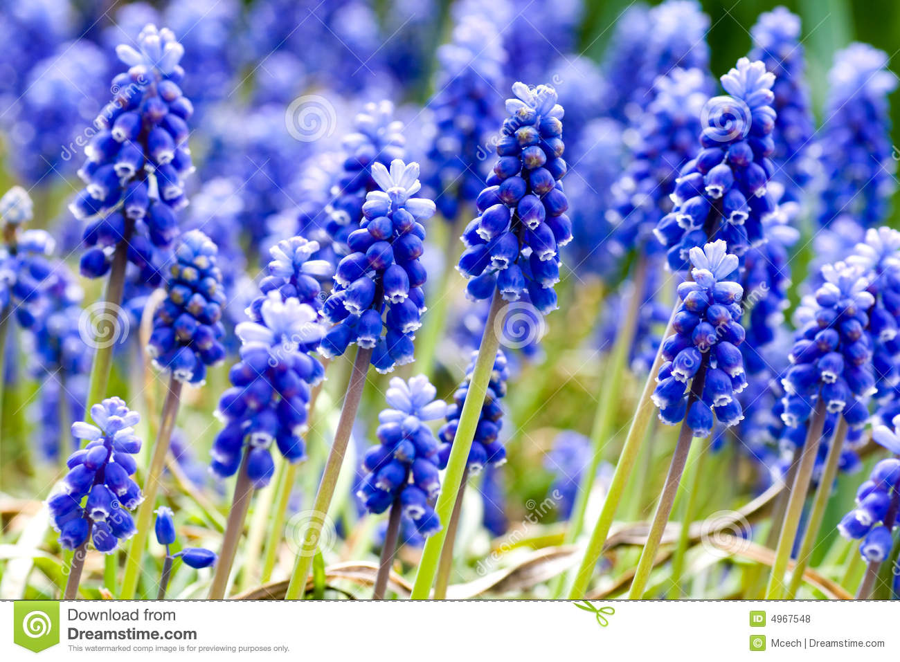 Spring flowers background royalty free stock photos image 4967548 background blue flowers spring dhlflorist Choice Image