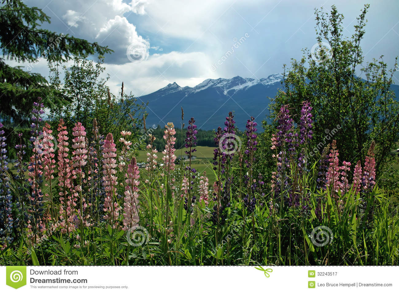 Spring Flowers Bc Highway 6 B C Canada Stock Image Image Of