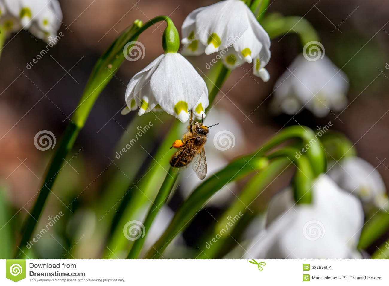 Spring Flowers With Bee Stock Photo Image Of Ecology 39787902