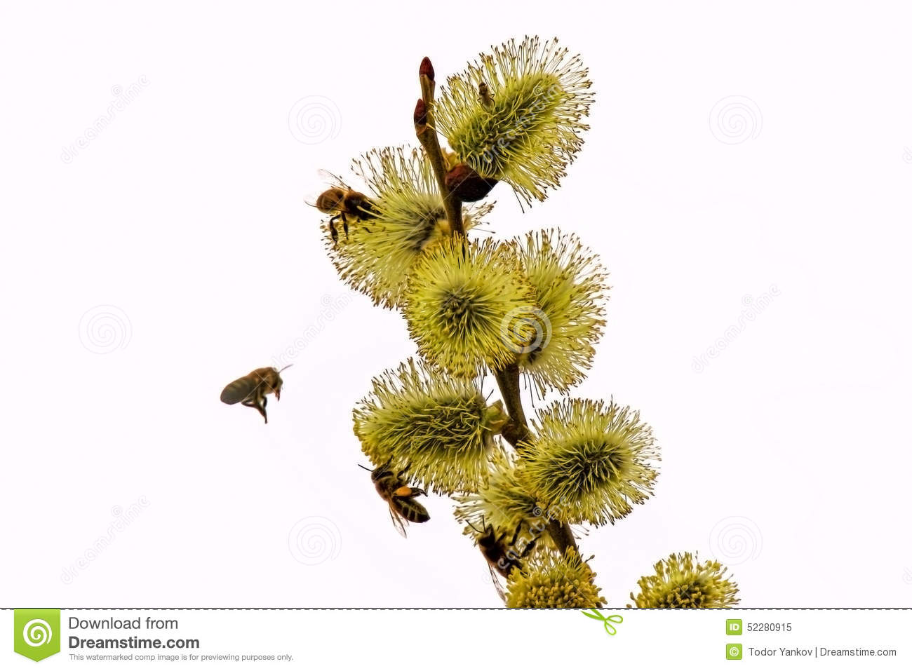 Spring flowers and bees stock photo 52280915 megapixl spring flowers and bees mightylinksfo