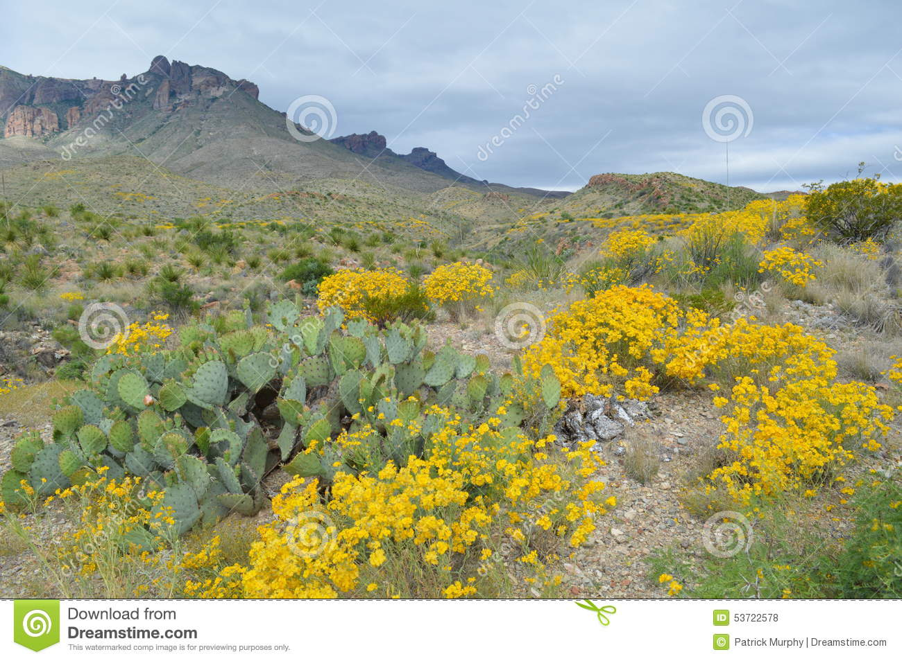 Spring flowers in big bend national park texas stock photo image spring flowers in big bend national park texas mightylinksfo Images