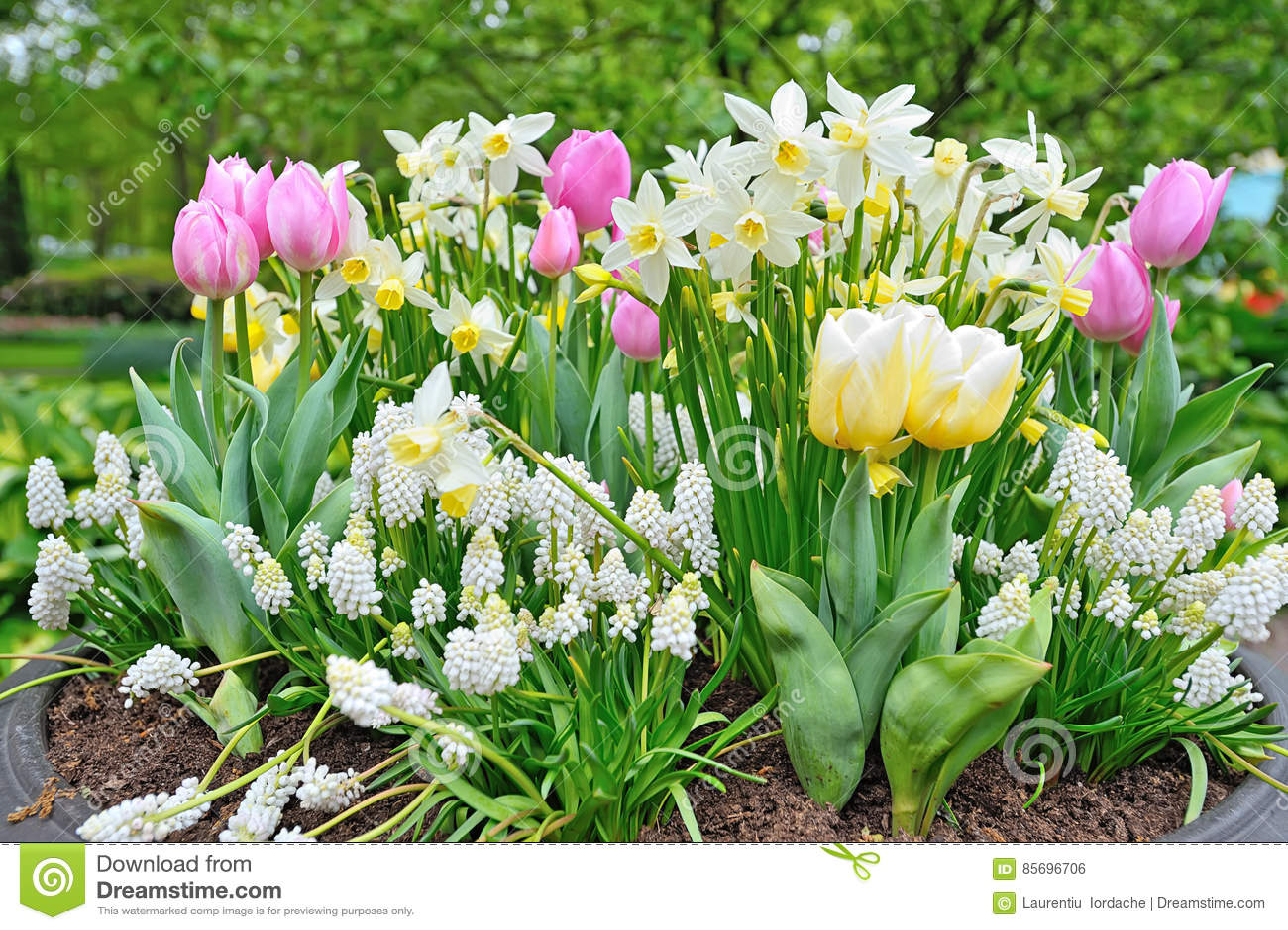 Spring flowers in big vase stock photo image of bloom 85696706 download comp mightylinksfo