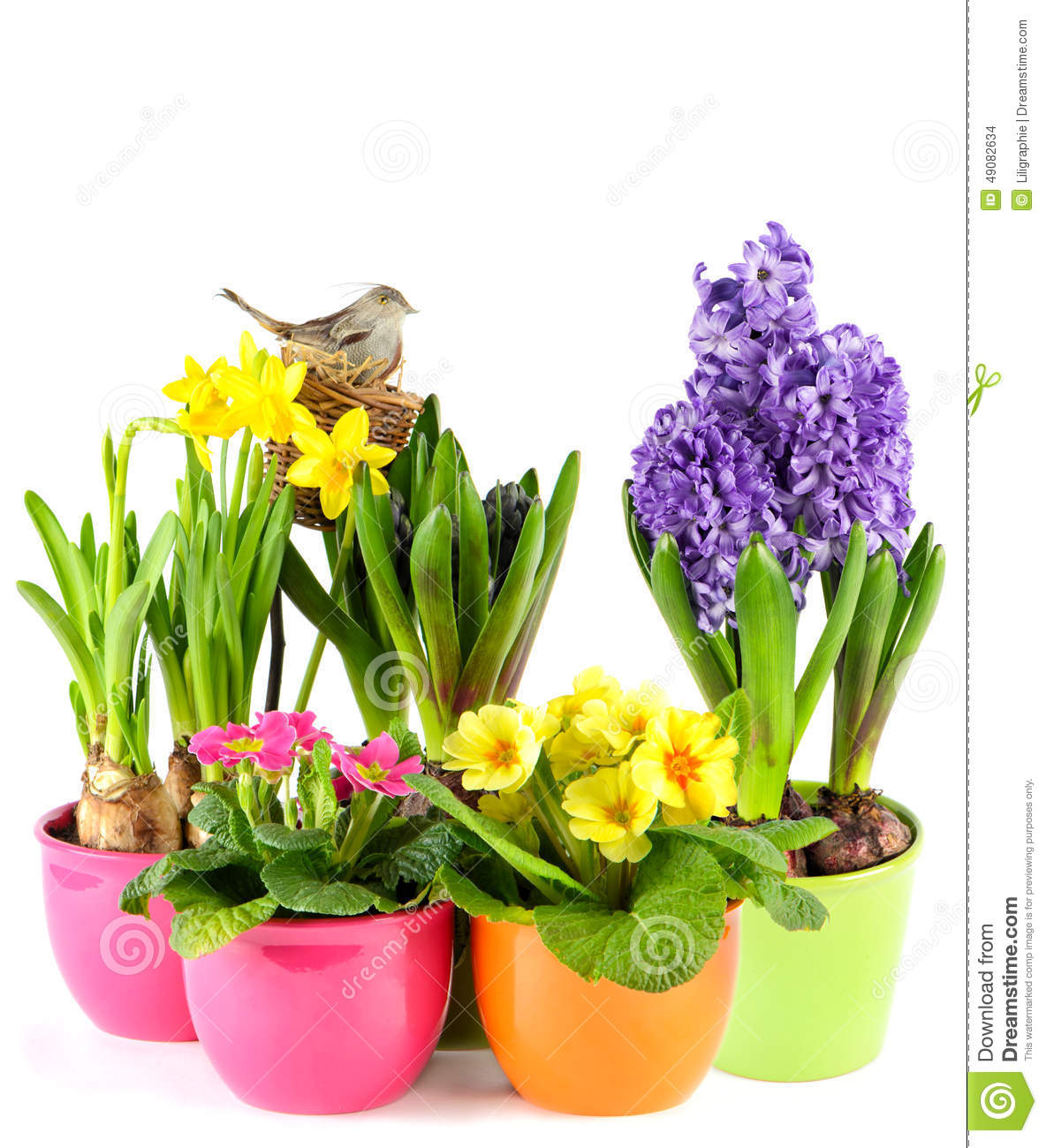 Spring Flowers With Birds Nest Colorful Easter Decoration Stock