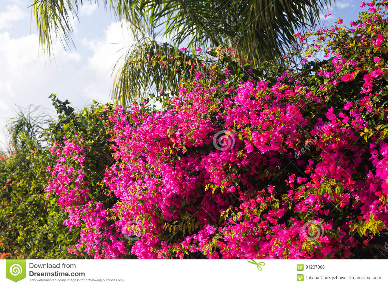 Spring flowers and blooming concept beautiful pink flowers download spring flowers and blooming concept beautiful pink flowers mediterranean tree stock mightylinksfo