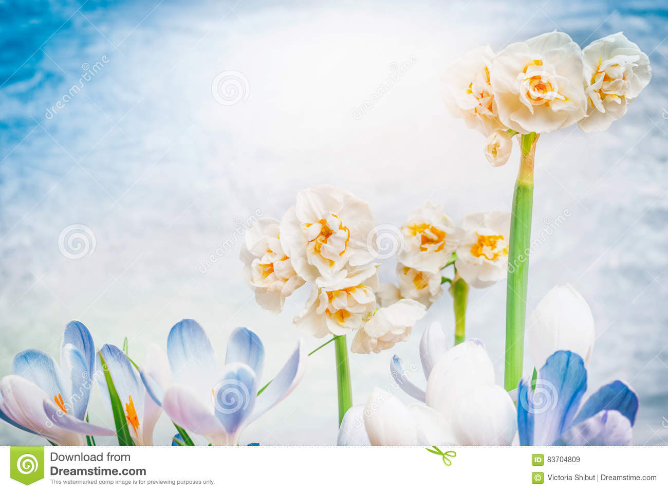 Spring Flowers Blooming At Sky Background, Floral Natue Stock Photo