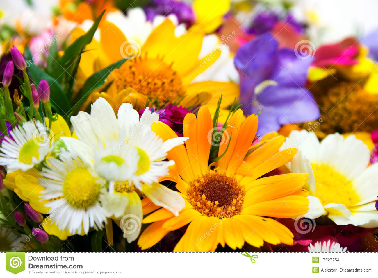 Spring Flowers Bouquet Stock Photo Image Of Spring Colourful
