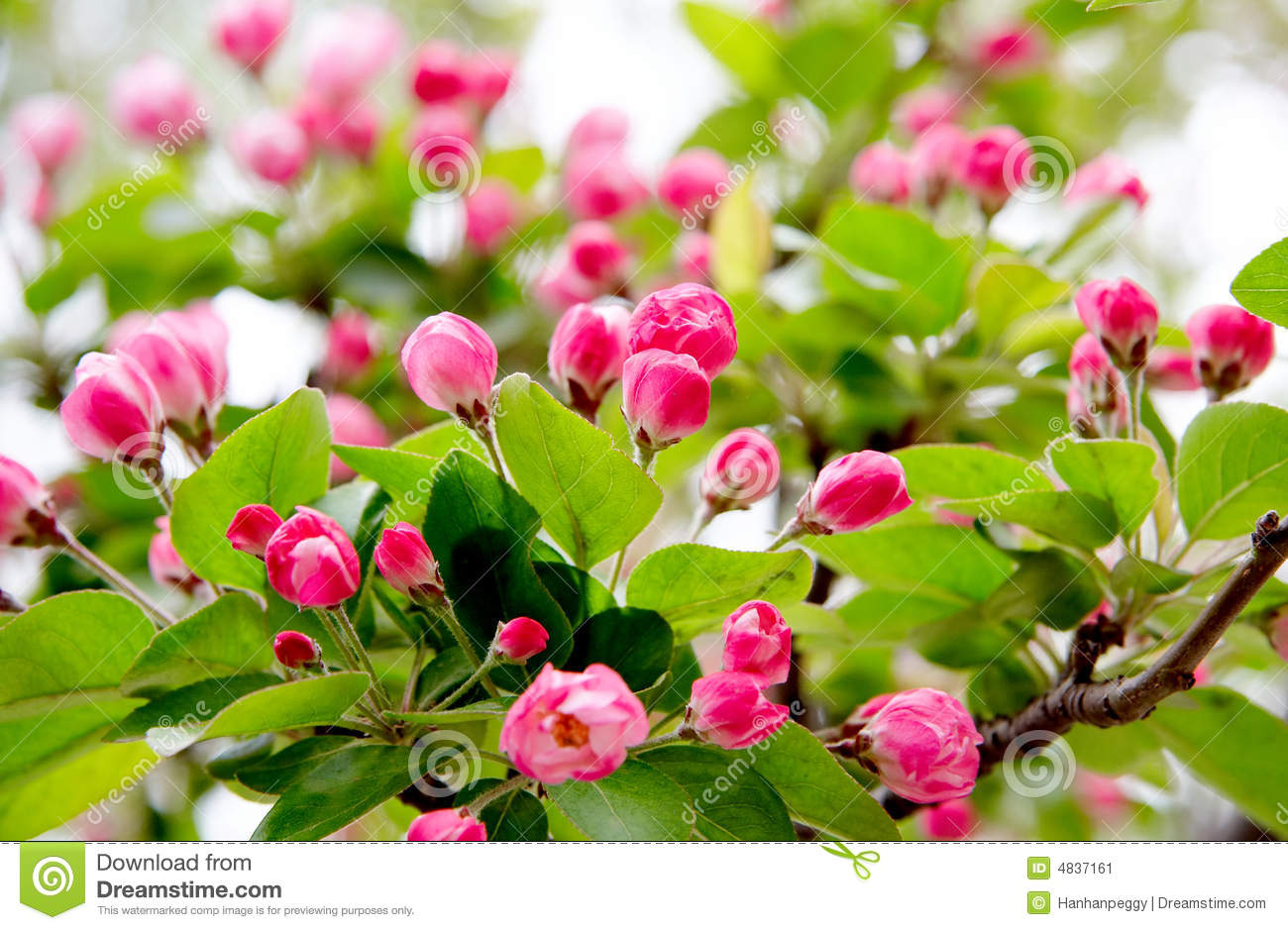 Spring Flowers Buds Stock Image Image Of Blooming Colored 4837161