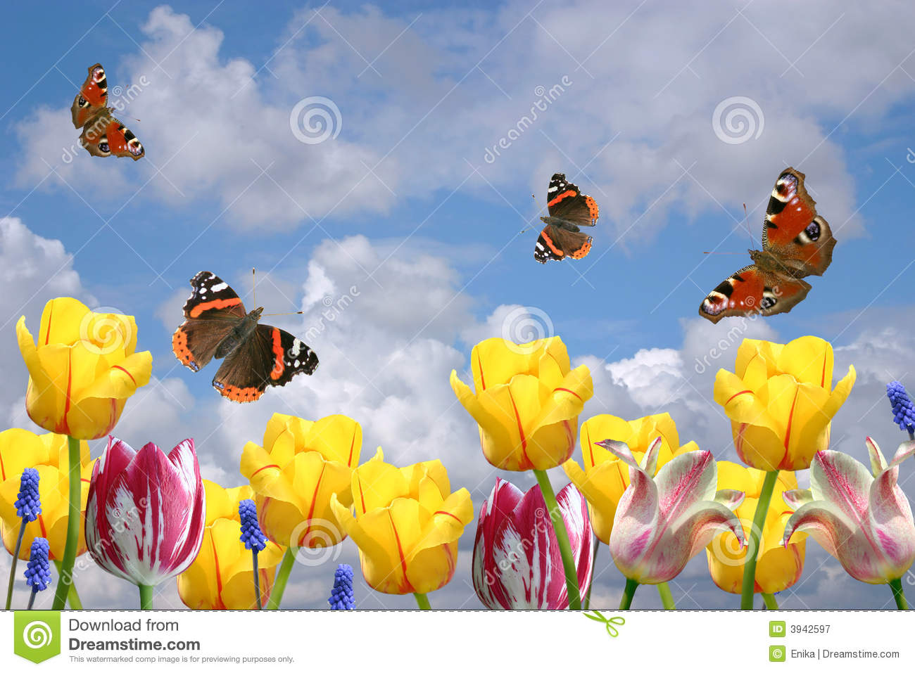 Spring Flowers And Butterflies Stock Image Image Of Brown Beauty