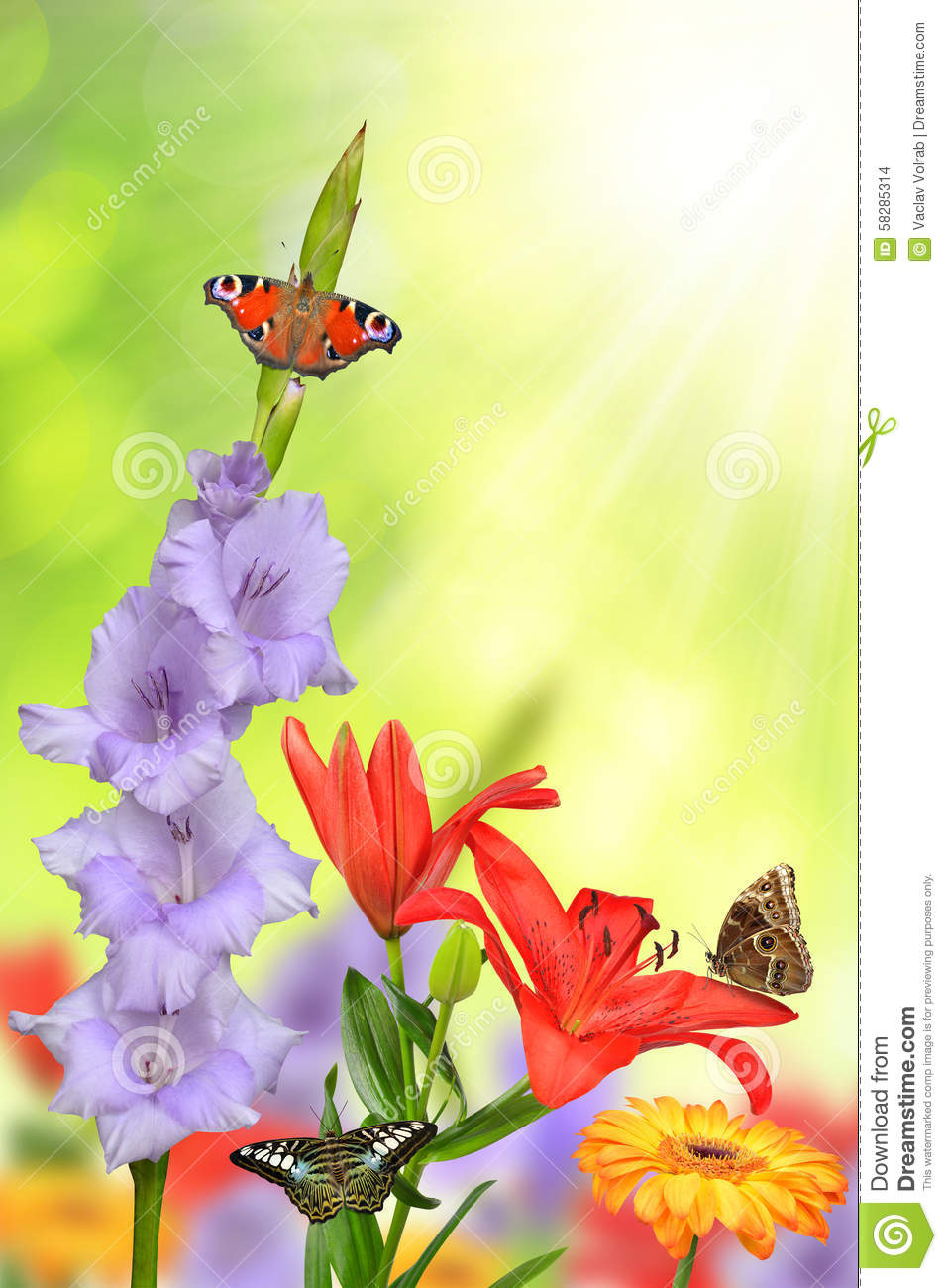 Spring Flowers With Butterflies Stock Photo Image Of Petal Fresh