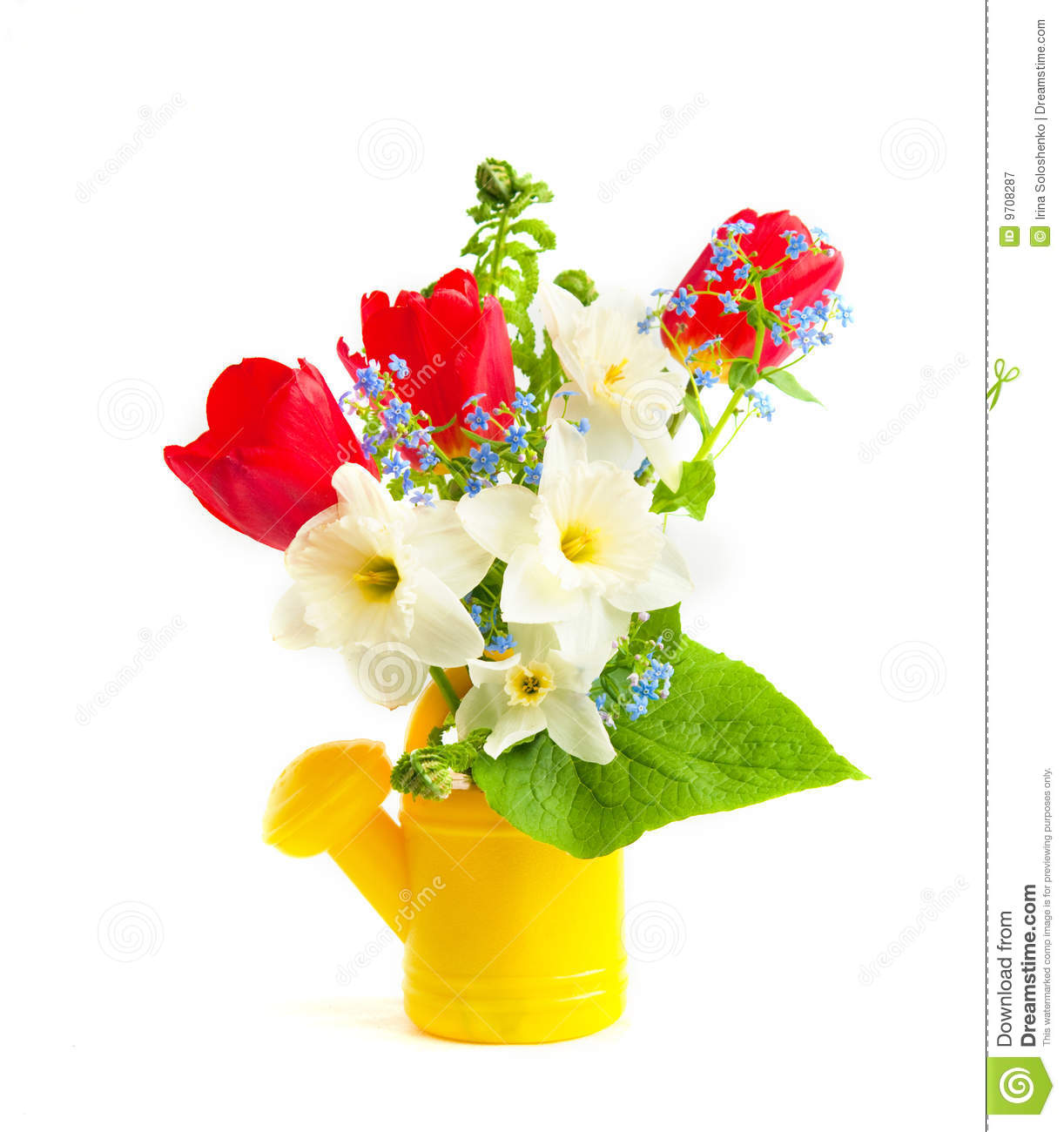Spring Flowers In A Childrens Watering Can Stock Image Image Of
