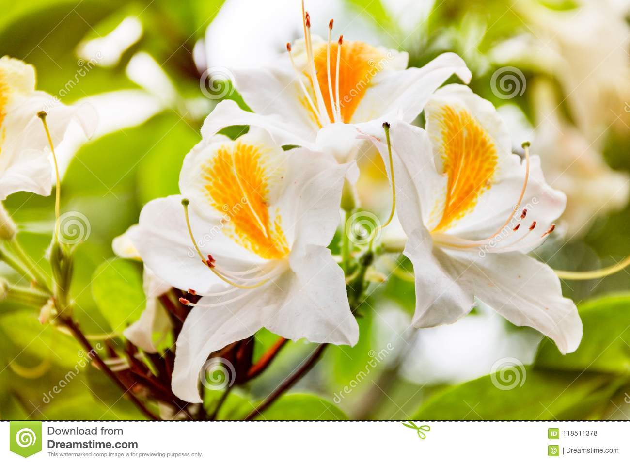 Spring Flowers Close Up Large Saggy Flower For Design Stock Photo