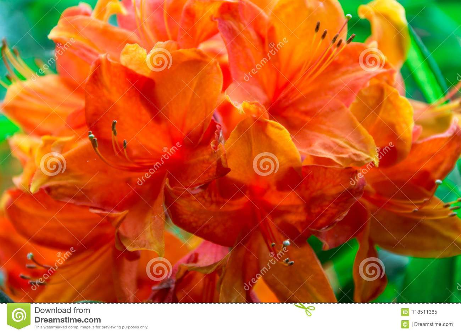 Spring Flowers Close Up Large Saggy Flower For Design Stock Image